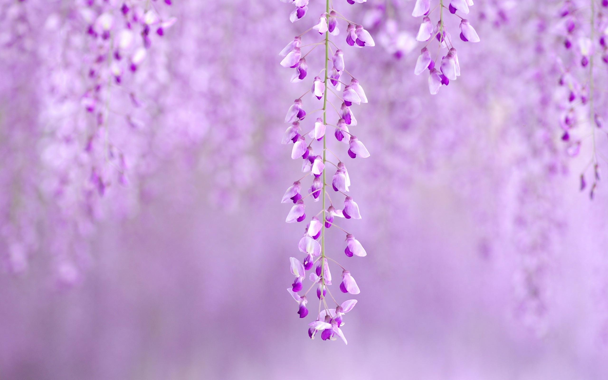 Desktop Wallpaper Spring Flowers Flowers Healthy