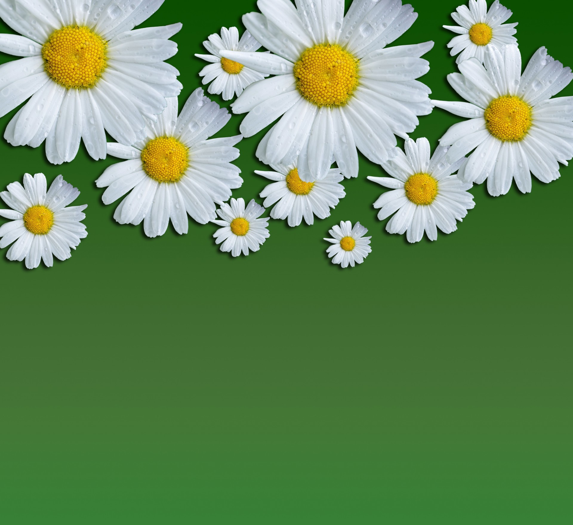 1920x1760 Daisy Flowers Background