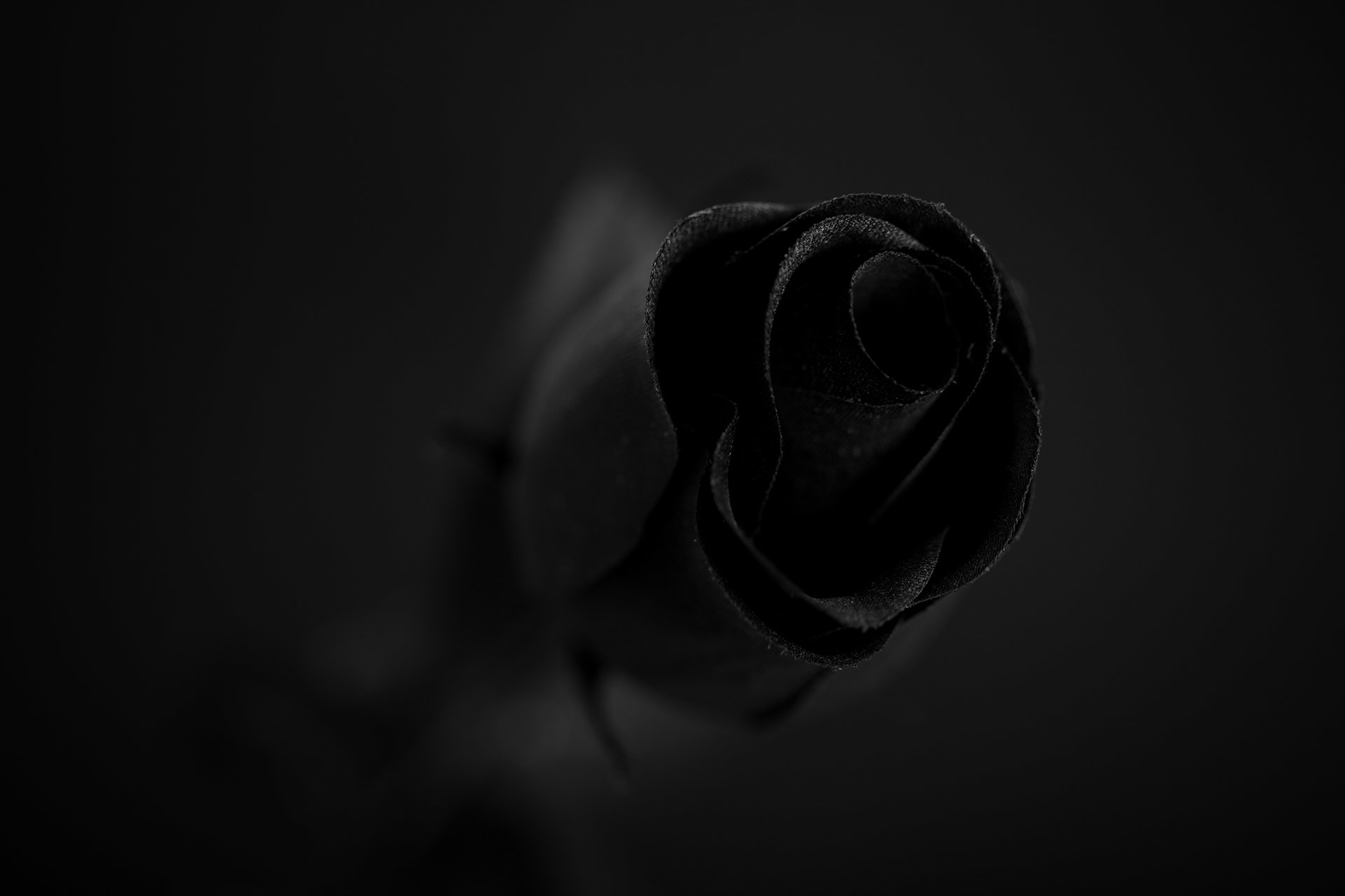 Black Roses Wallpaper 64 Images