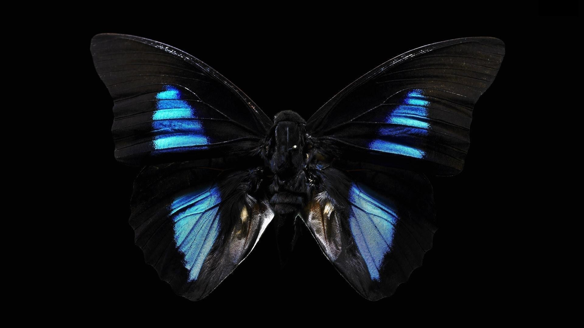 1920x1080 Black Butterfly HD Wallpapers - HD Wallpapers Inn