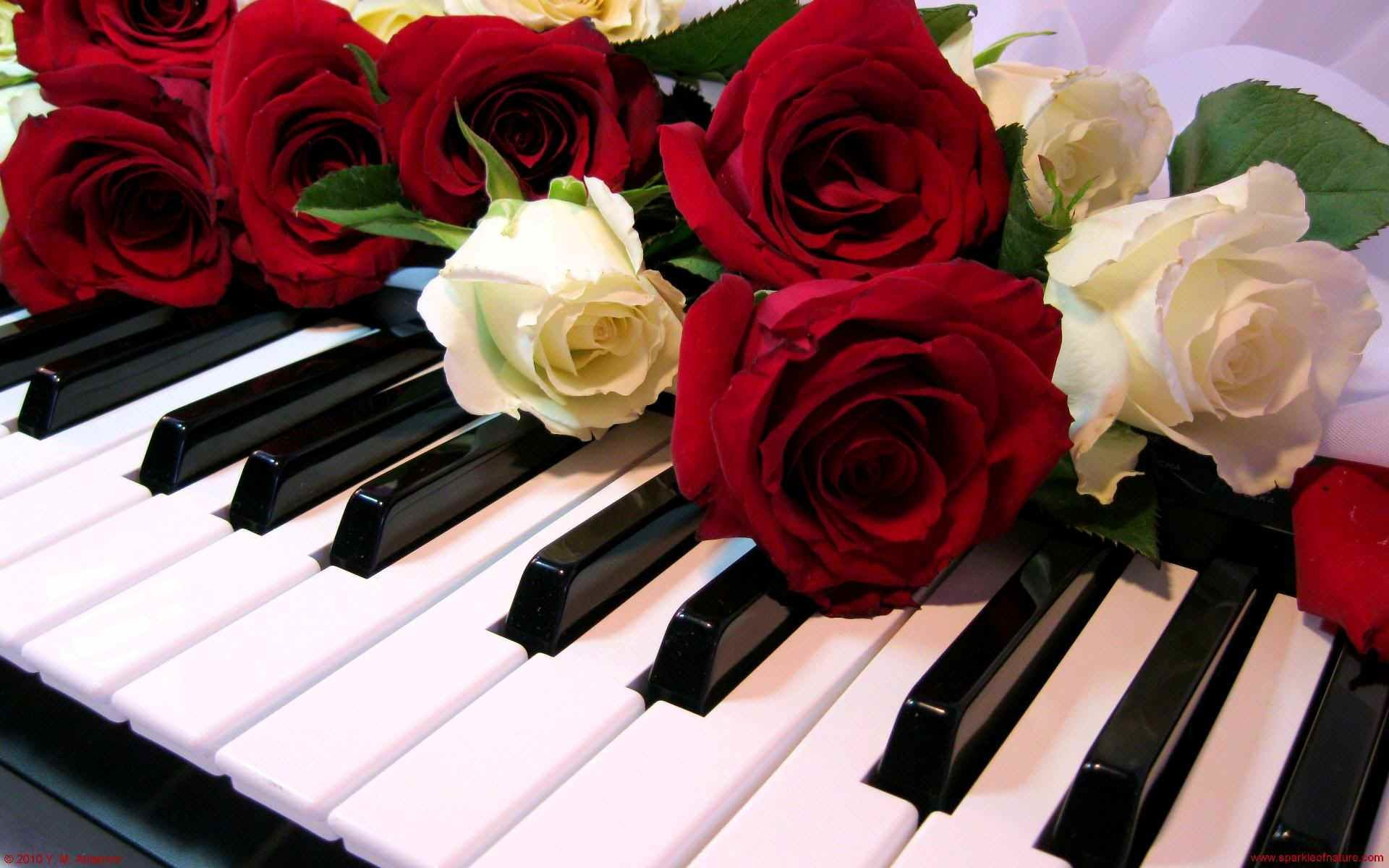 1920x1200 hd-wallpapers-wallpaper-sparkle-piano-roses-1920×1200-wallpaper