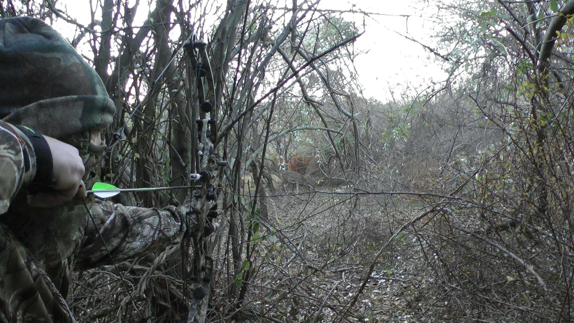 Hoyt Bow Hunting Wallpaper (64+ images)