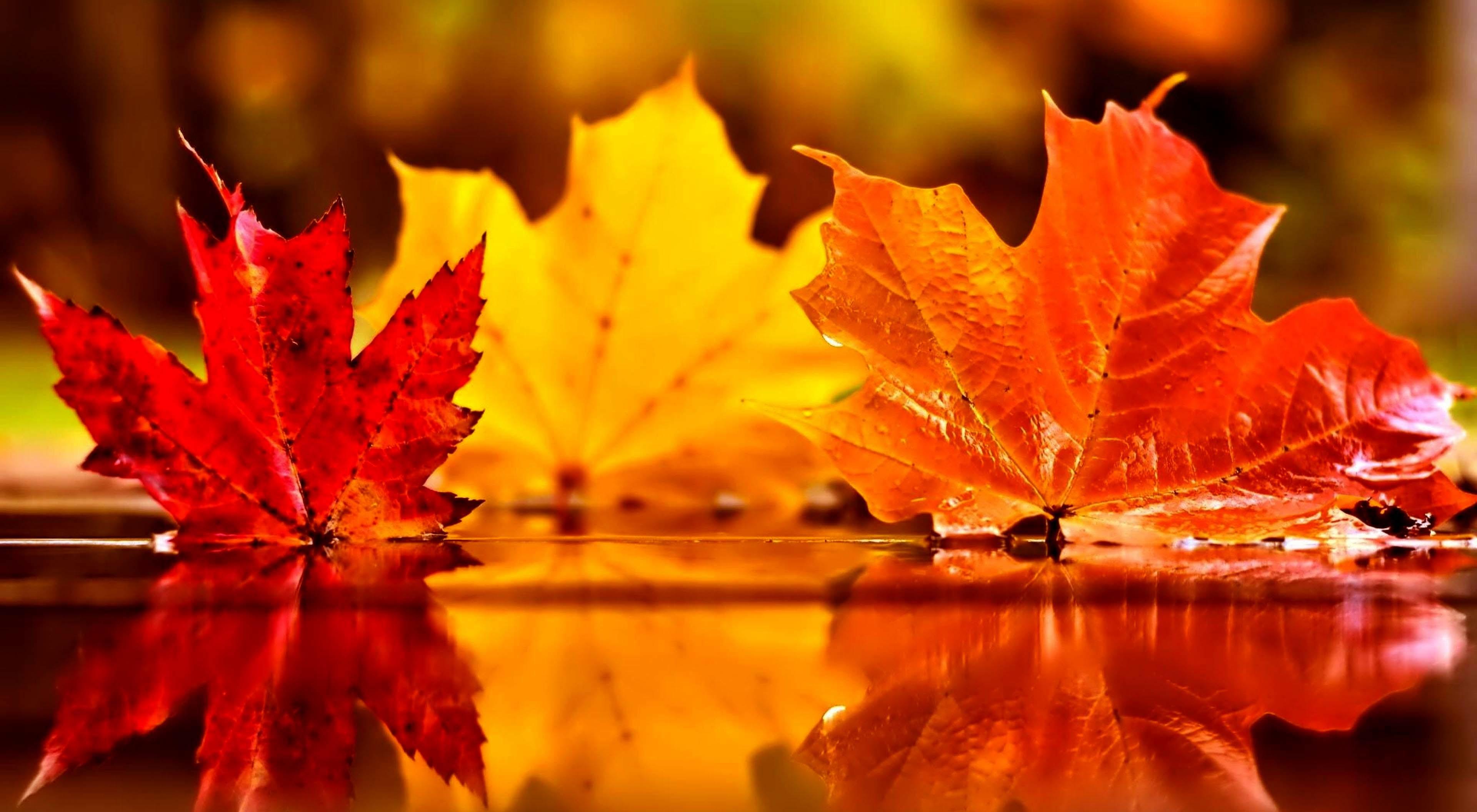 Autumn Leaf Wallpaper (68+ images)