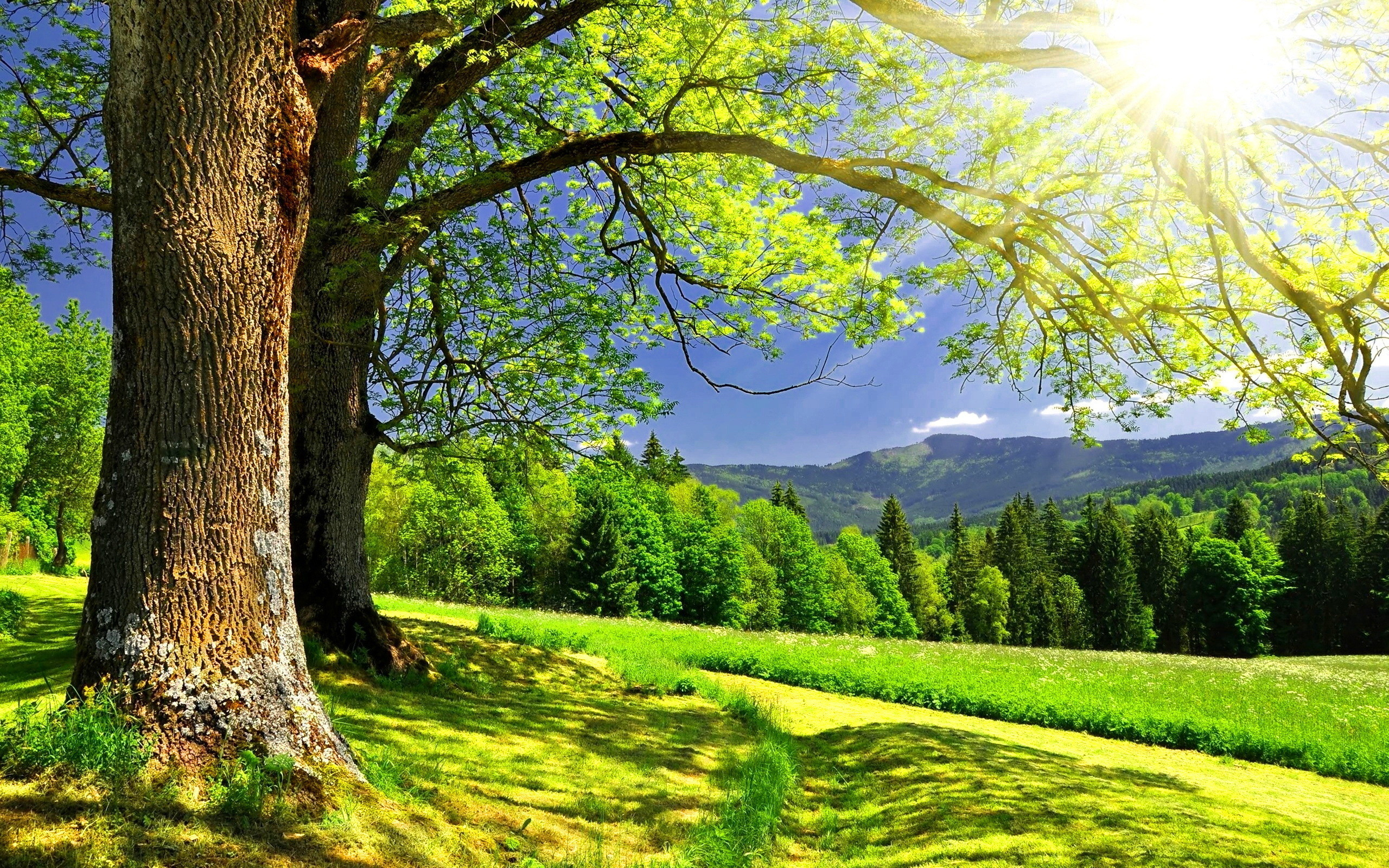 2560x1600 Earth - Spring Summer Landscape Tree Forest Sun Sunbeam Sunlight Wallpaper
