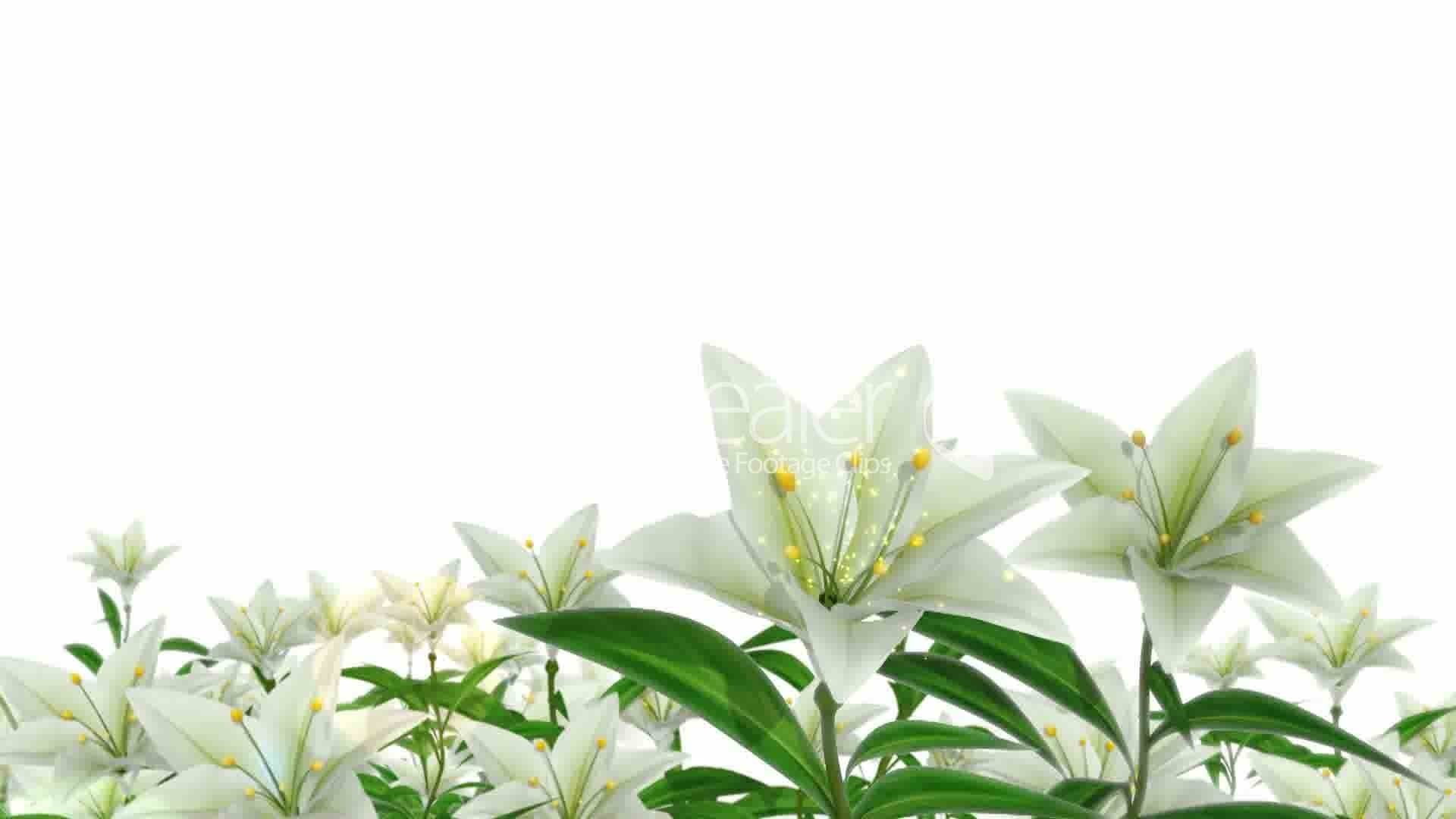 Easter Lily Wallpaper (58+ Images