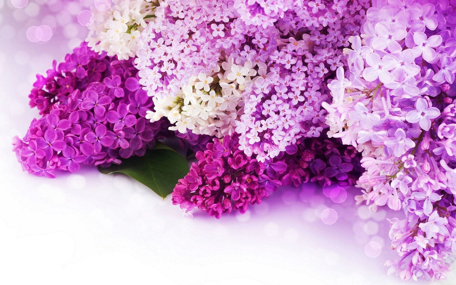 Pink And Purple Flower Backgrounds 59 Images