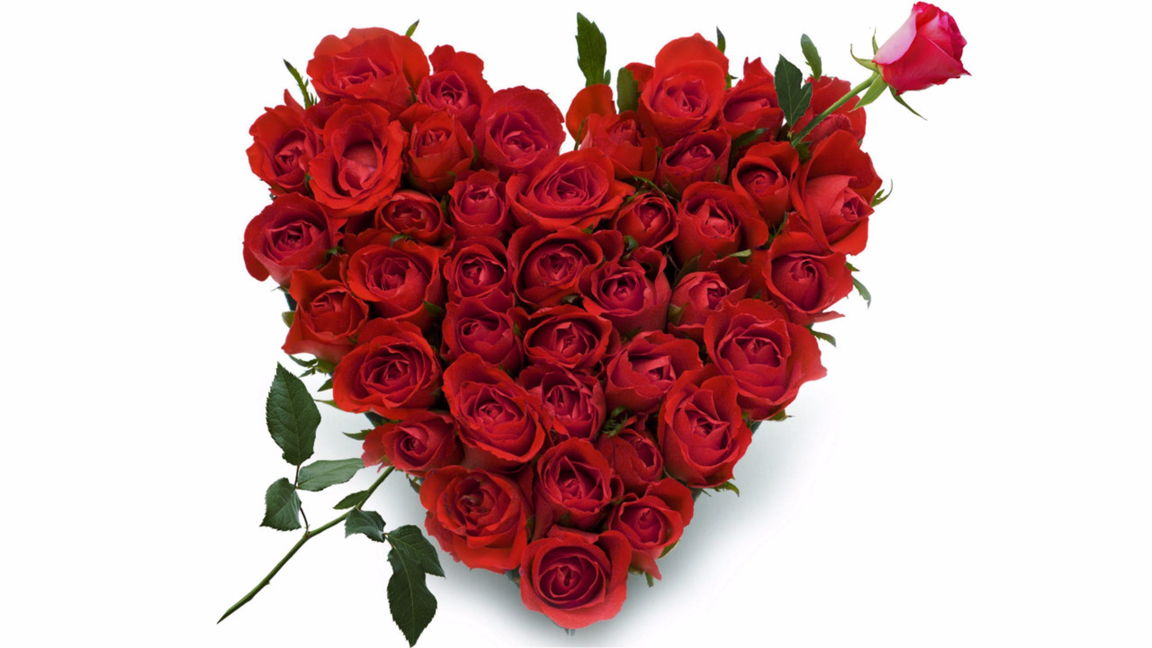3840x2160 Our wide range of Red Rose Heart Shape Arrangement flowers buy online. a  variety of carnations on a heart-shaped Oasis base to create a special  Valentine's ...