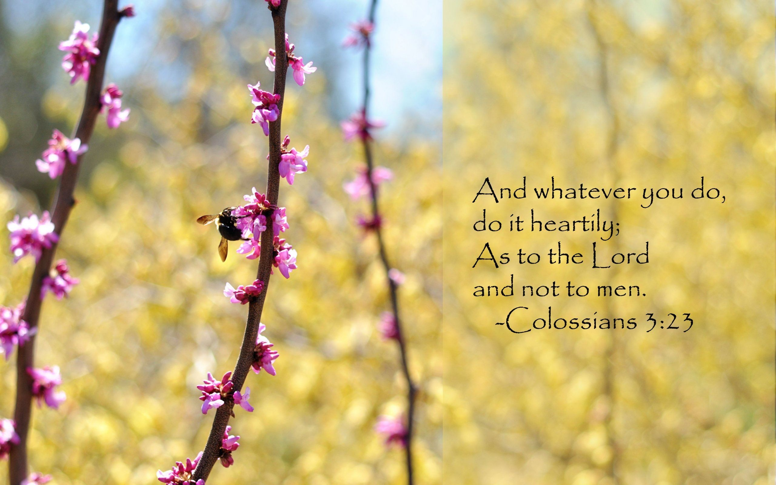 2560x1600 Whatever You Do Bible-Quote Wallpapers