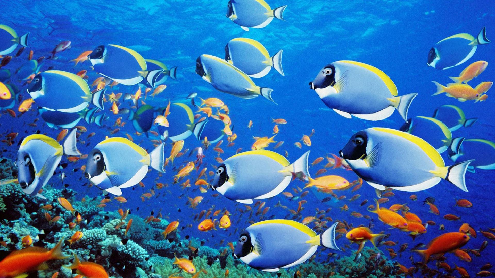 1920x1200 Sea Seabed Landscape Underwater Ocean Fish Wallpapers