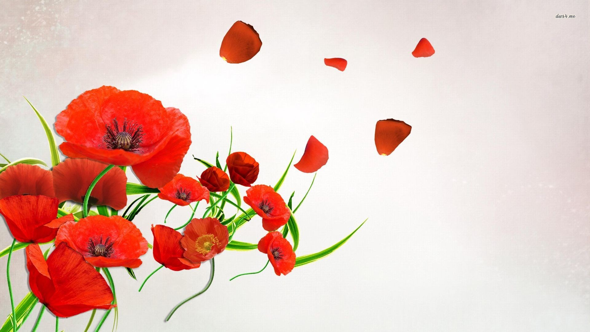 1920x1080 ... Poppy petals floating in the wind wallpaper  ...