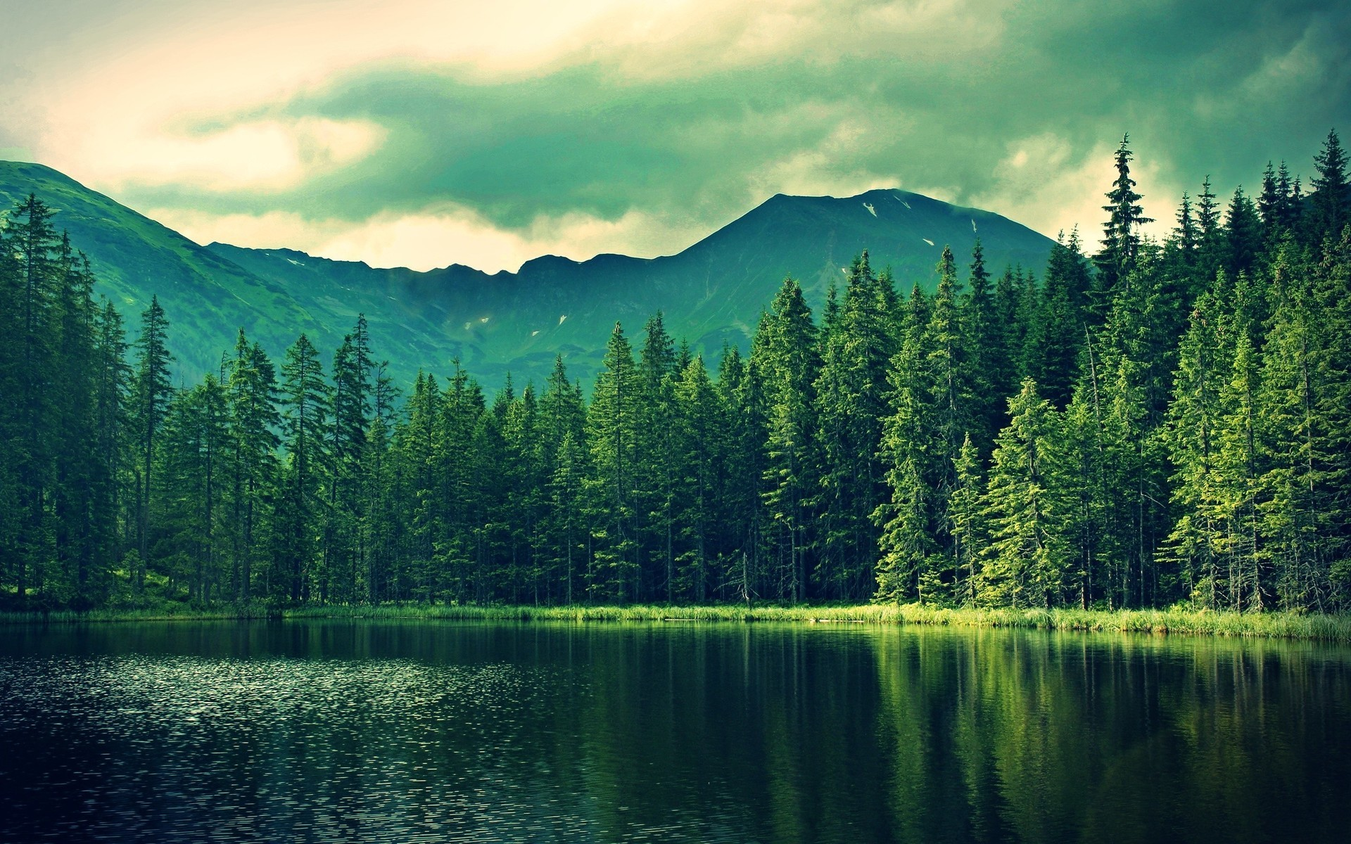 Beautiful Forest Wallpaper (53+ images)