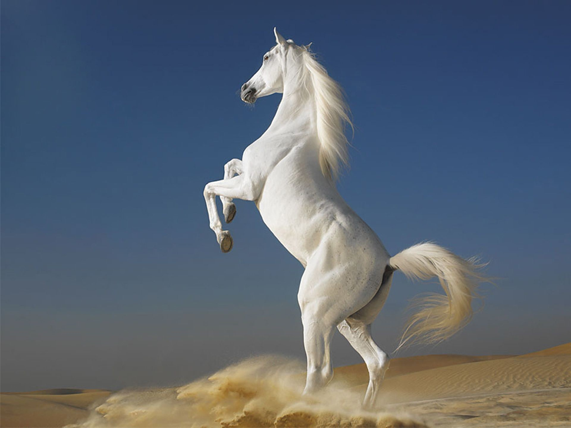 1920x1440 Horse Wallpapers Pack Download FLGX DB 1920×1440 Images Of Horse Wallpapers  (40 Wallpapers