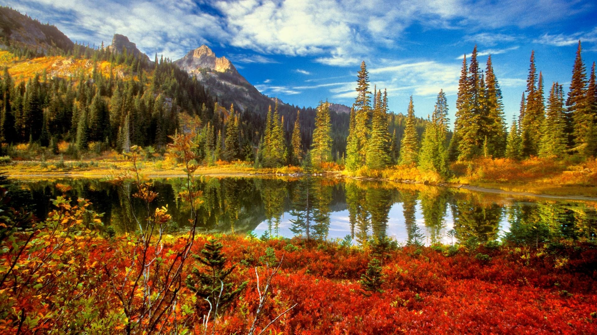 beautiful fall flowers wallpaper 50 images