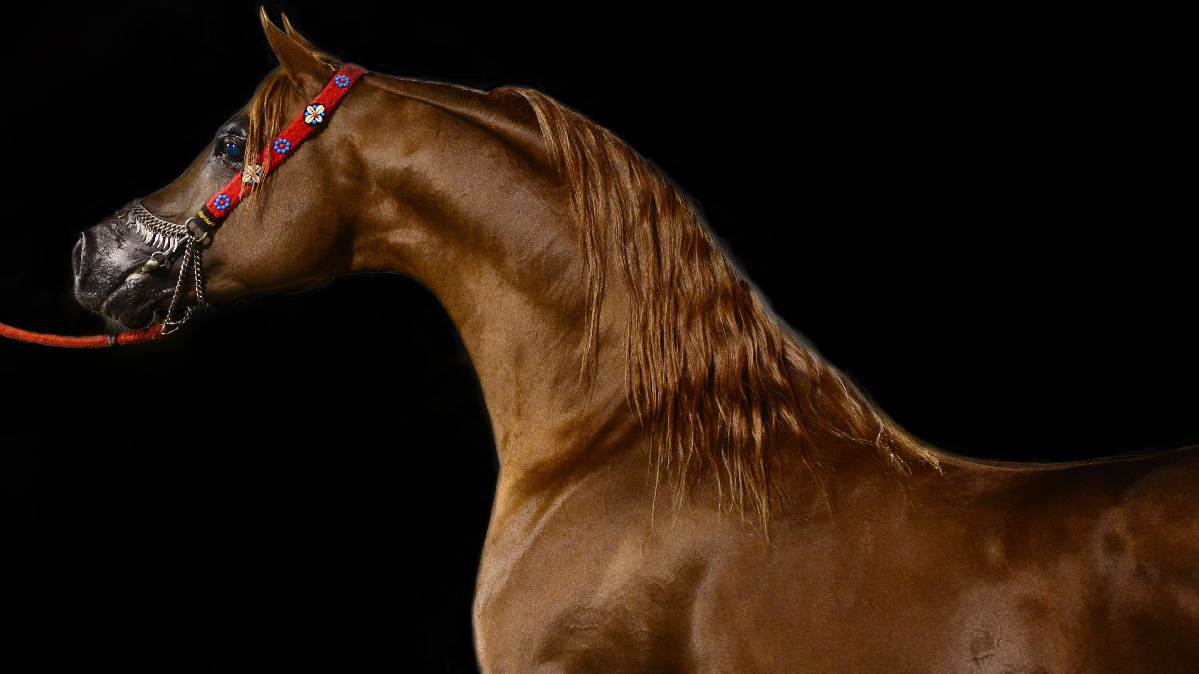 3840x2160 Arabian Horse Wallpapers | Android | Pinterest | Horse wallpaper .