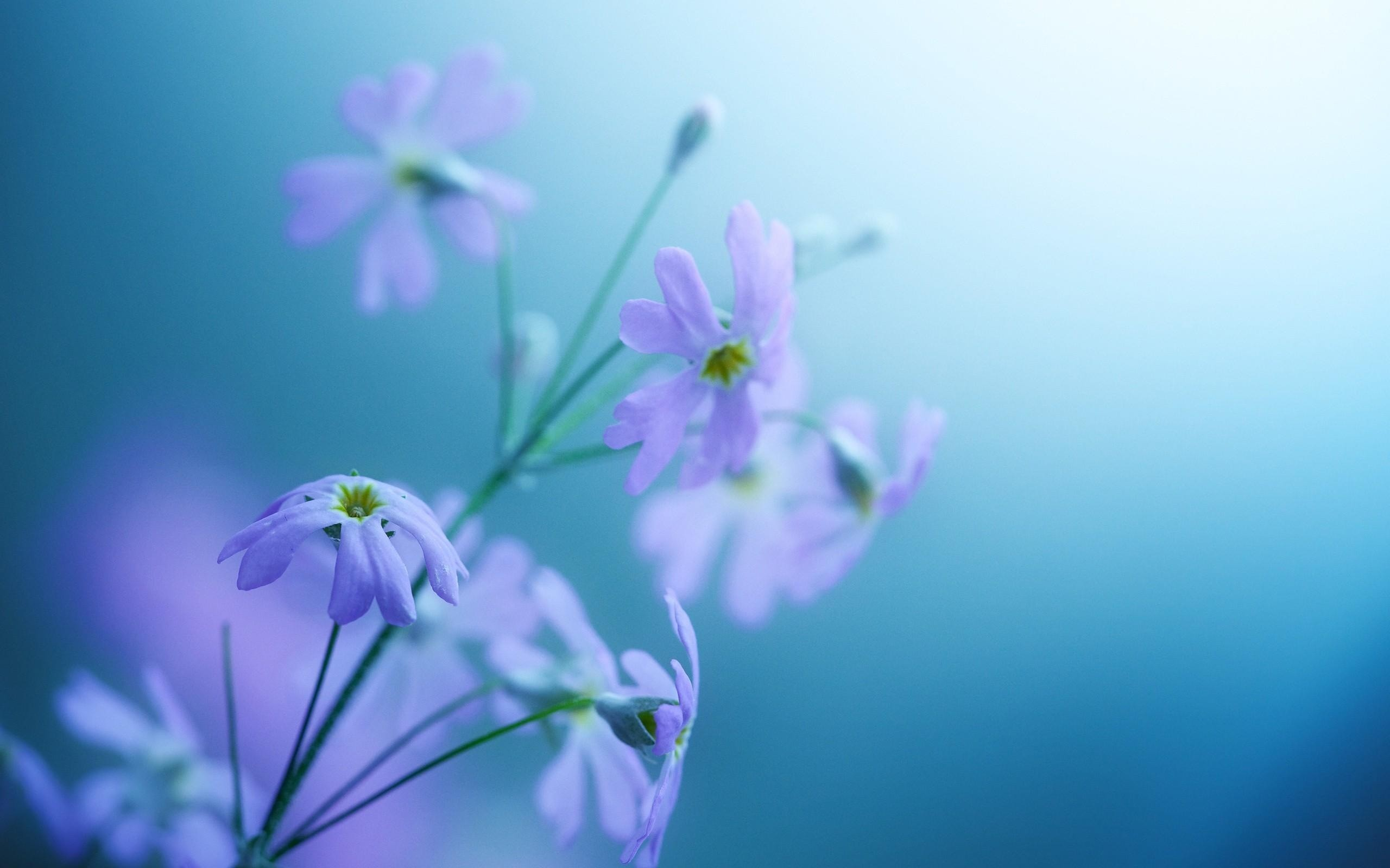 Beautiful Flower Wallpaper For Computer Image collections