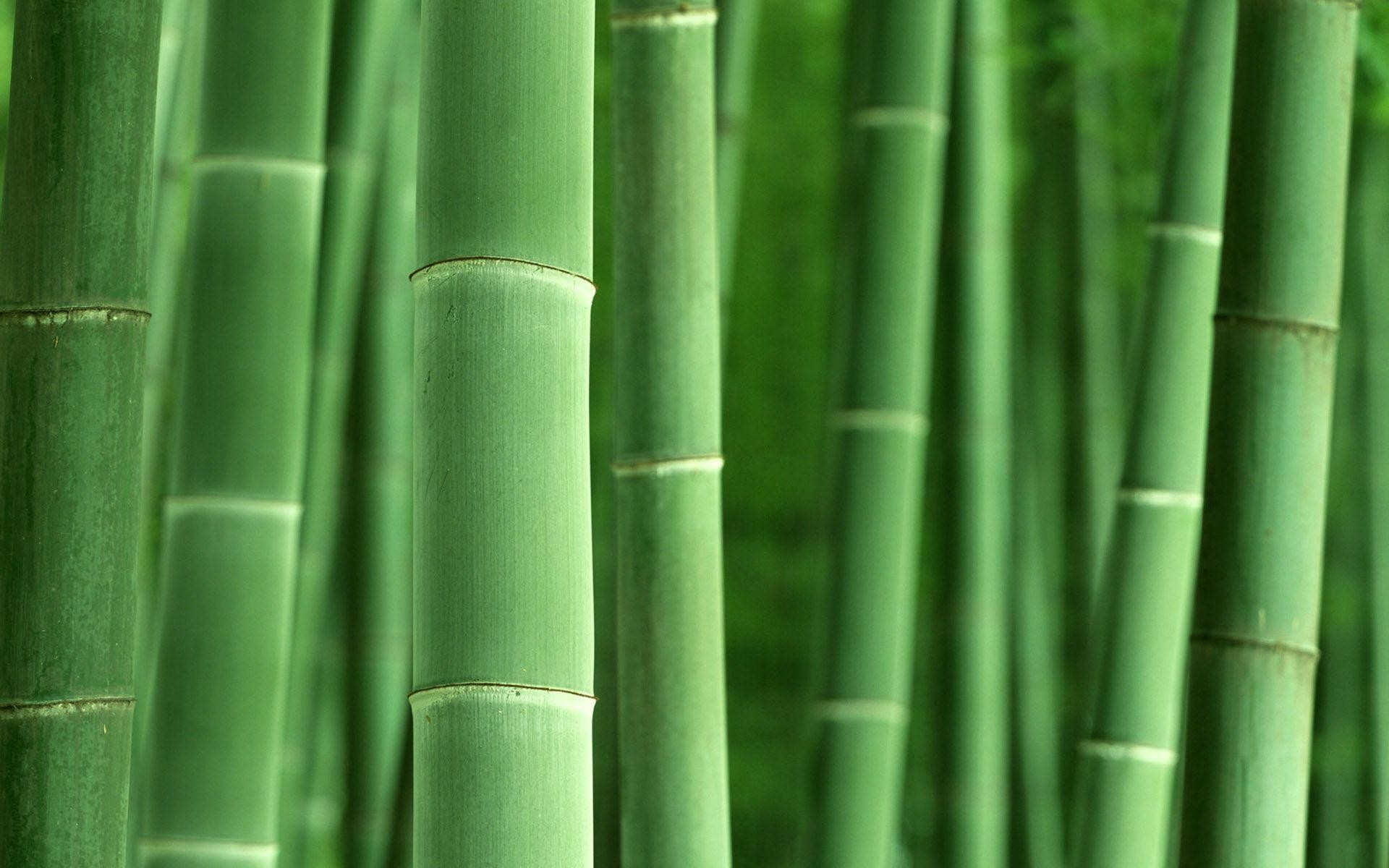 1920x1200 Bamboo 6 desktop wallpaper Â« Desktopia.