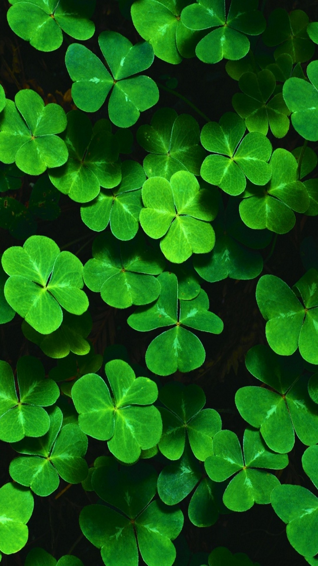 1080x1920 Customize your iPhone 6 Plus with this high definition Shamrocks wallpaper  from HD Phone Wallpapers!