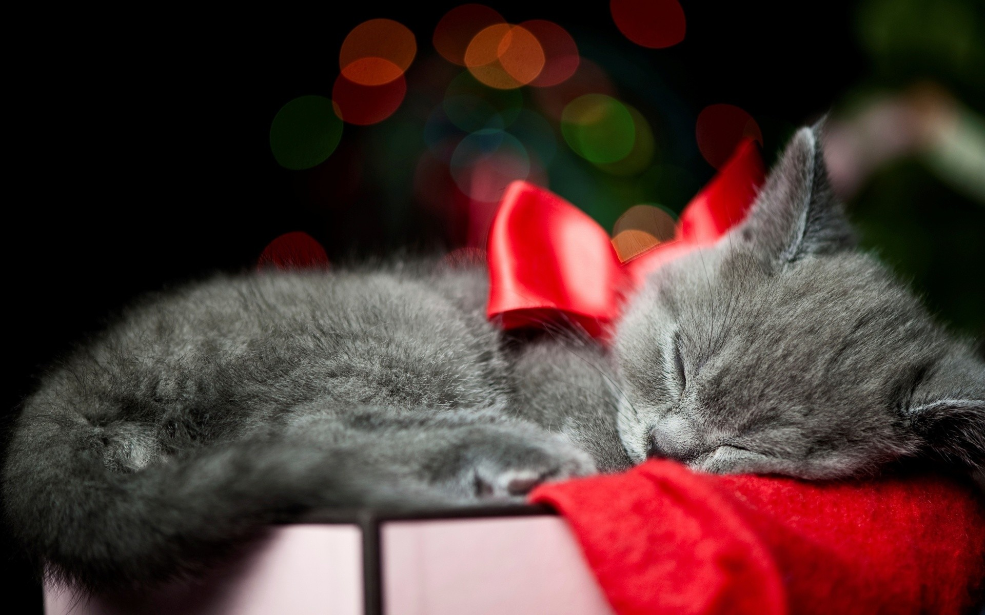 1920x1200 christmas bow red animals cats kittens whiskers sleep cute wallpaper .
