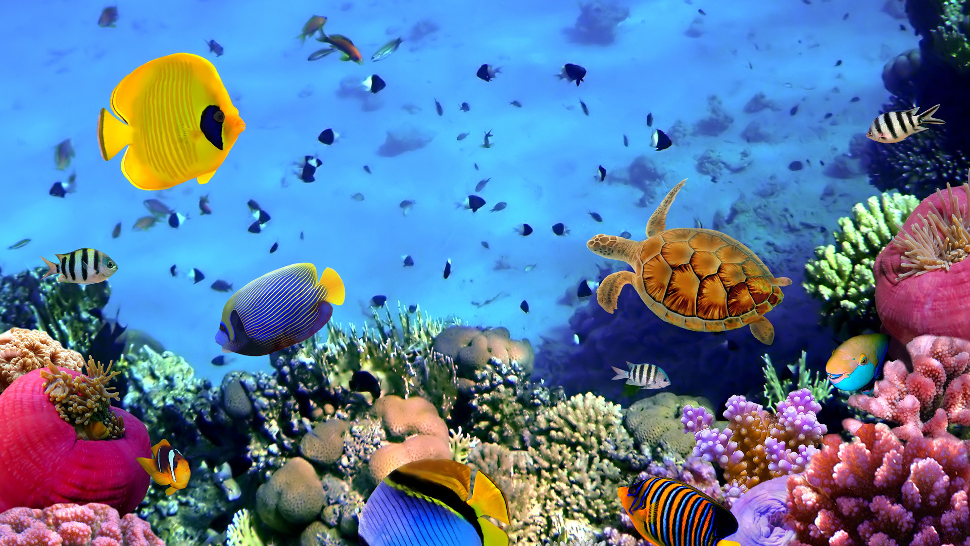 1920x1080 Coral Reef Wallpaper Free #Rs0