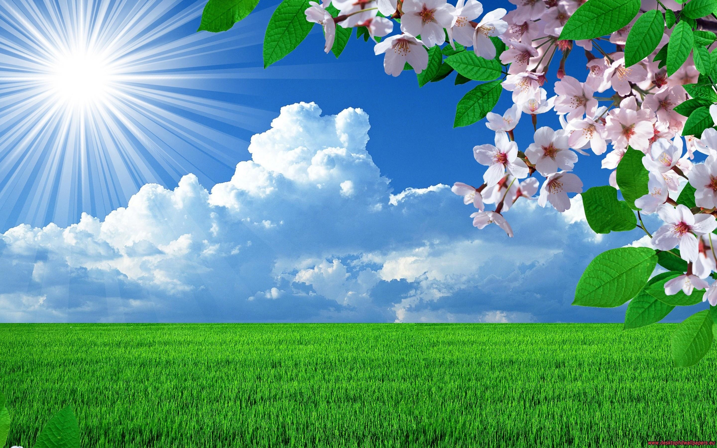 2880x1800 HD Nature Spring Flowers Landscapes Trees Sky Landscape Background Images  Wallpaper