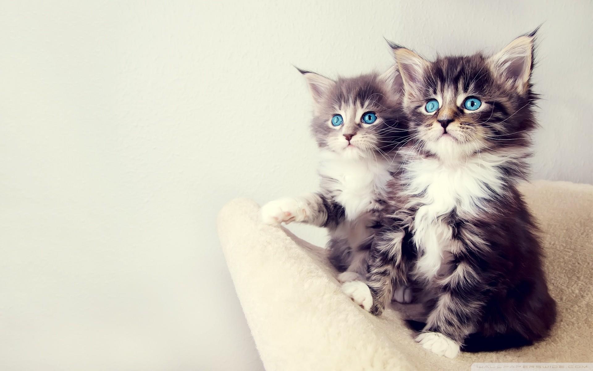 Baby Kittens Wallpaper 63 images