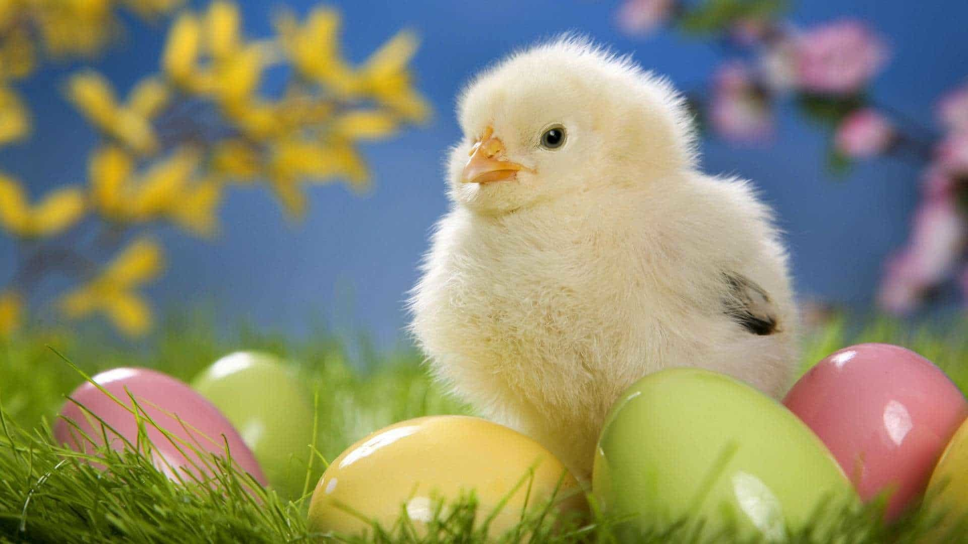 1920x1080 Happy Easter Chick Wallpaper