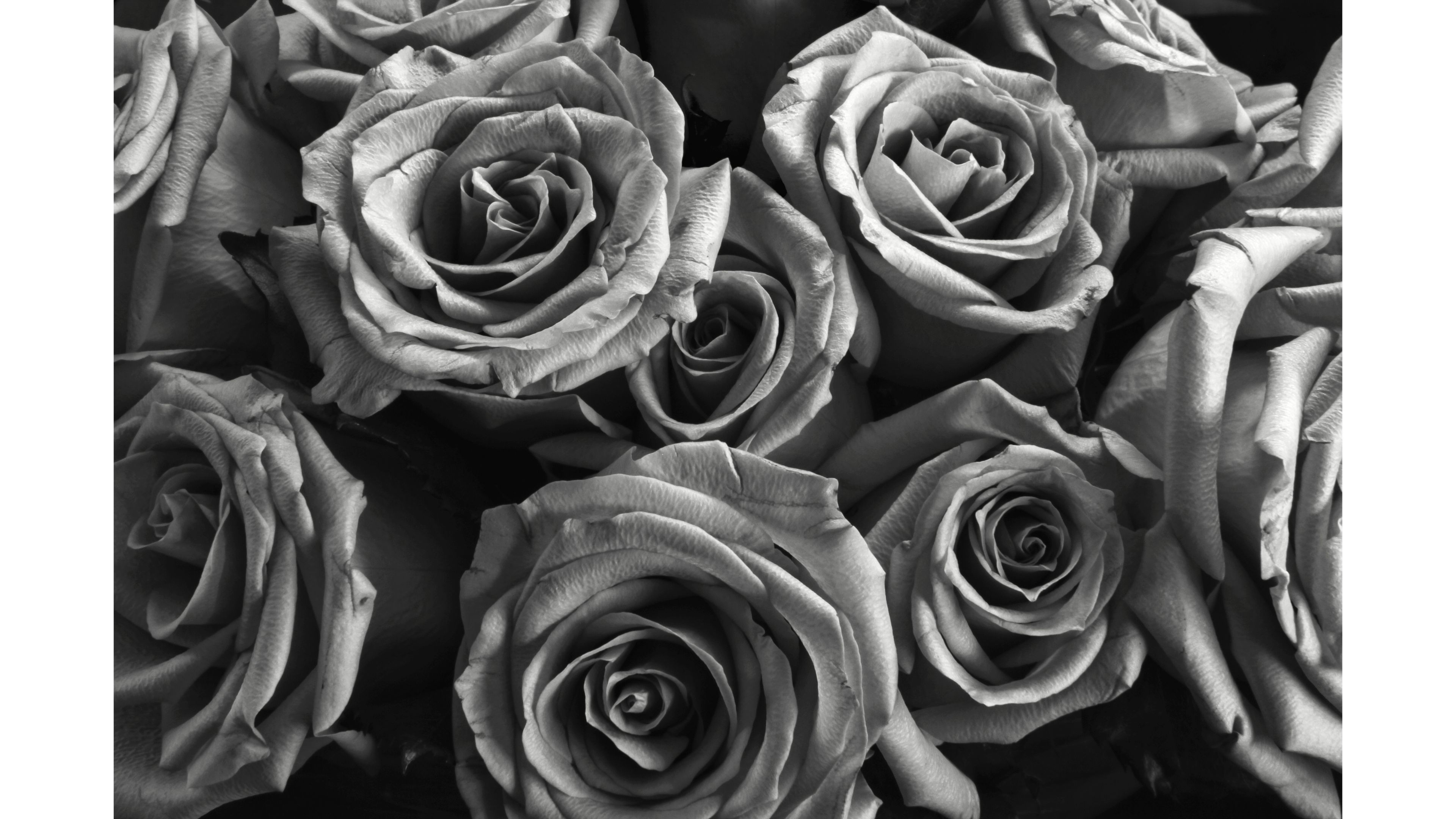 Black And White Rose Wallpaper (61+ Images