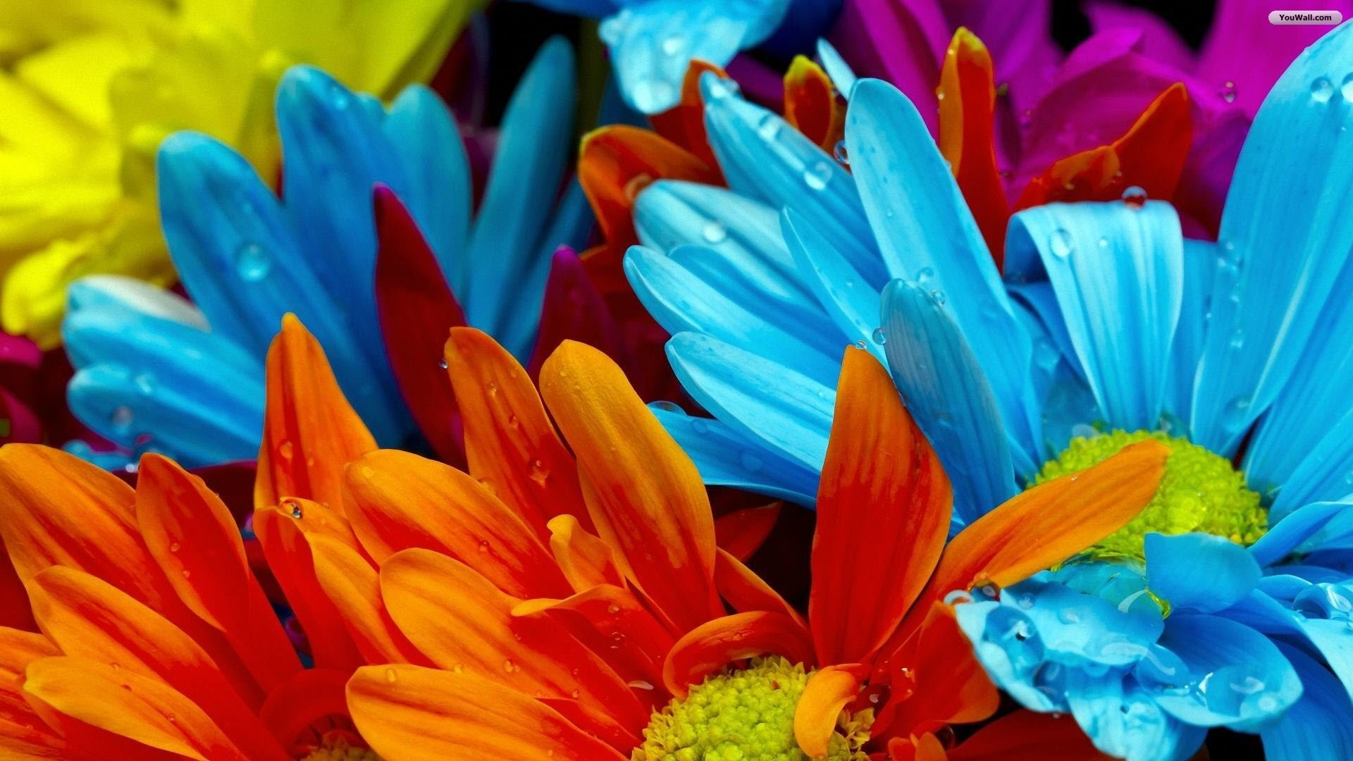 1920x1080 Summer Flowers Wallpapers Background Download 2560x1600 Desktop