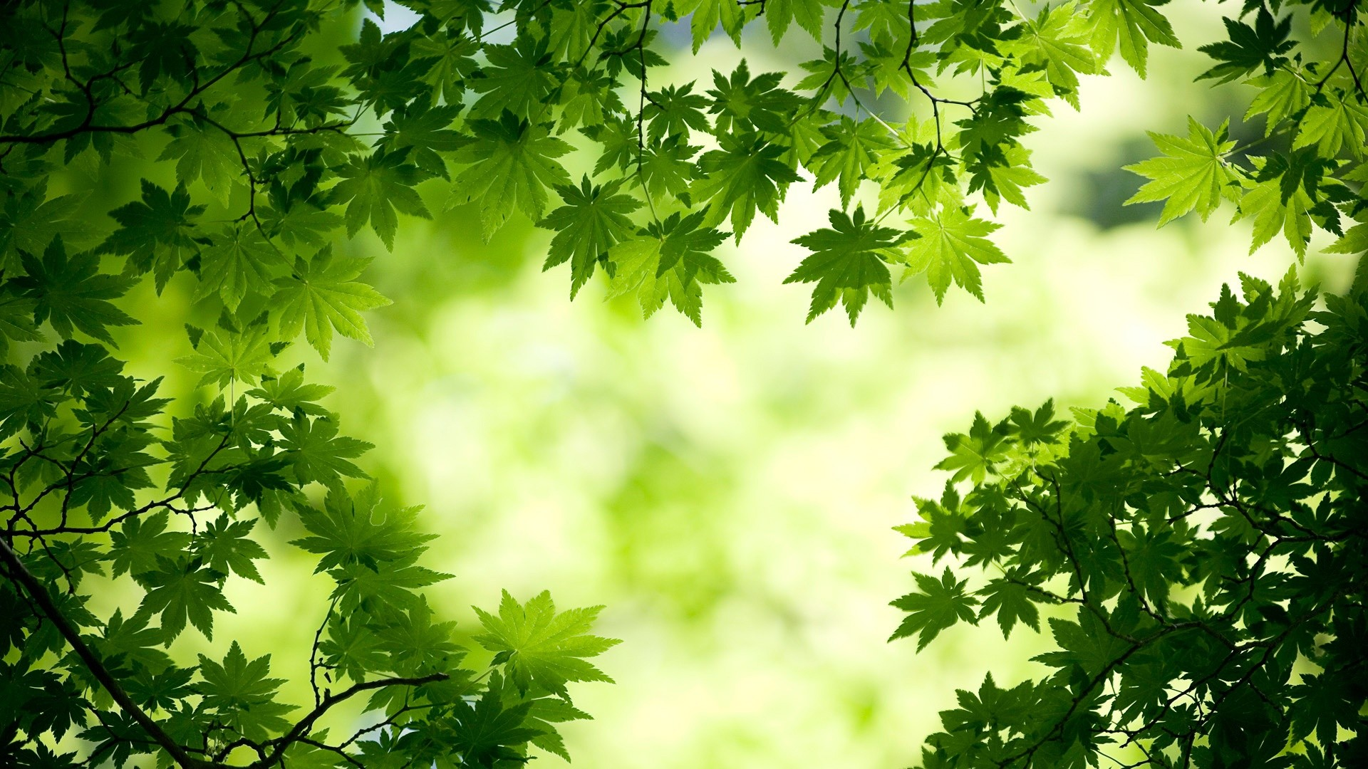 1920x1080 maple-leave-green-wallpaper