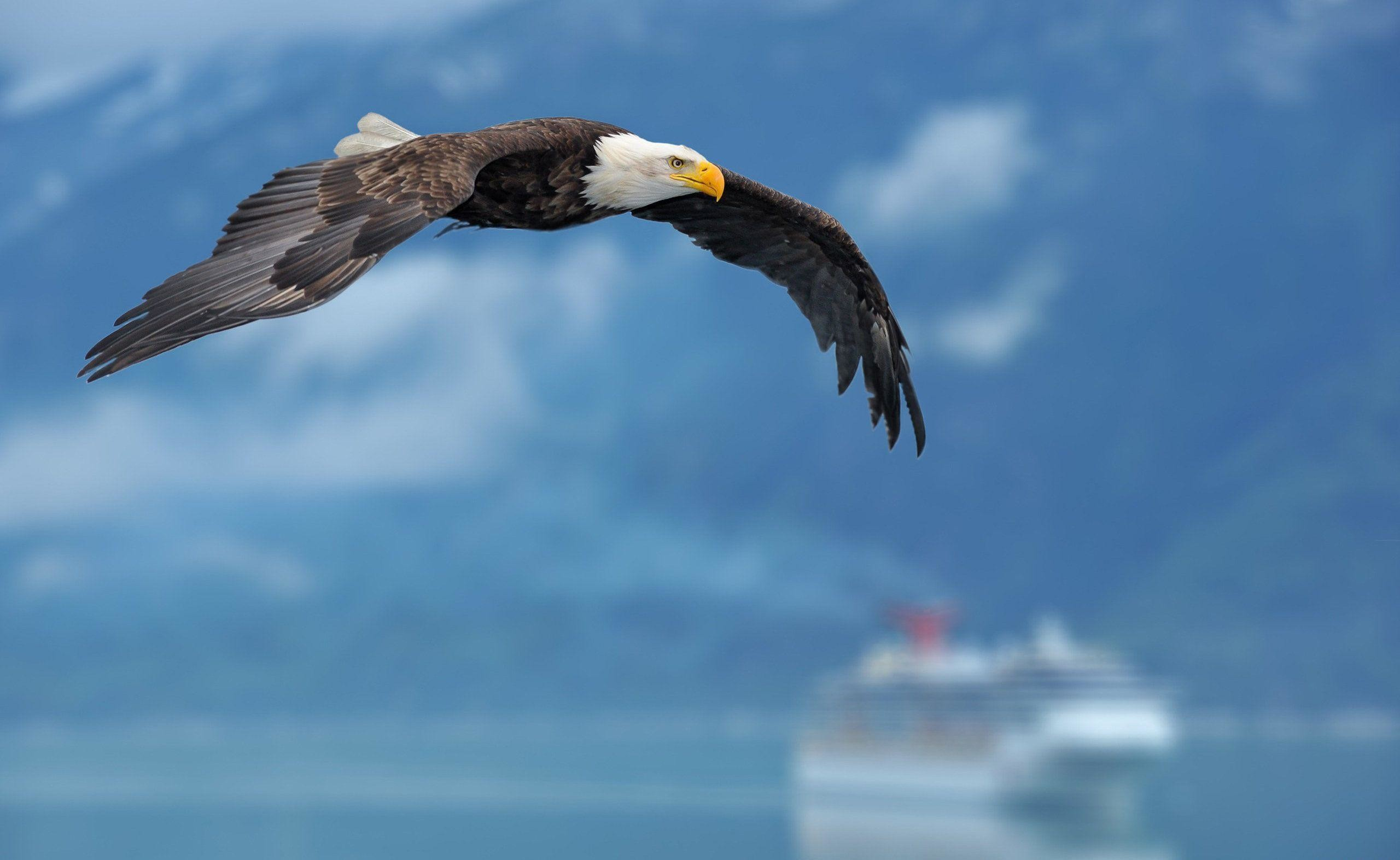 American Eagle Wallpapers 69 Images