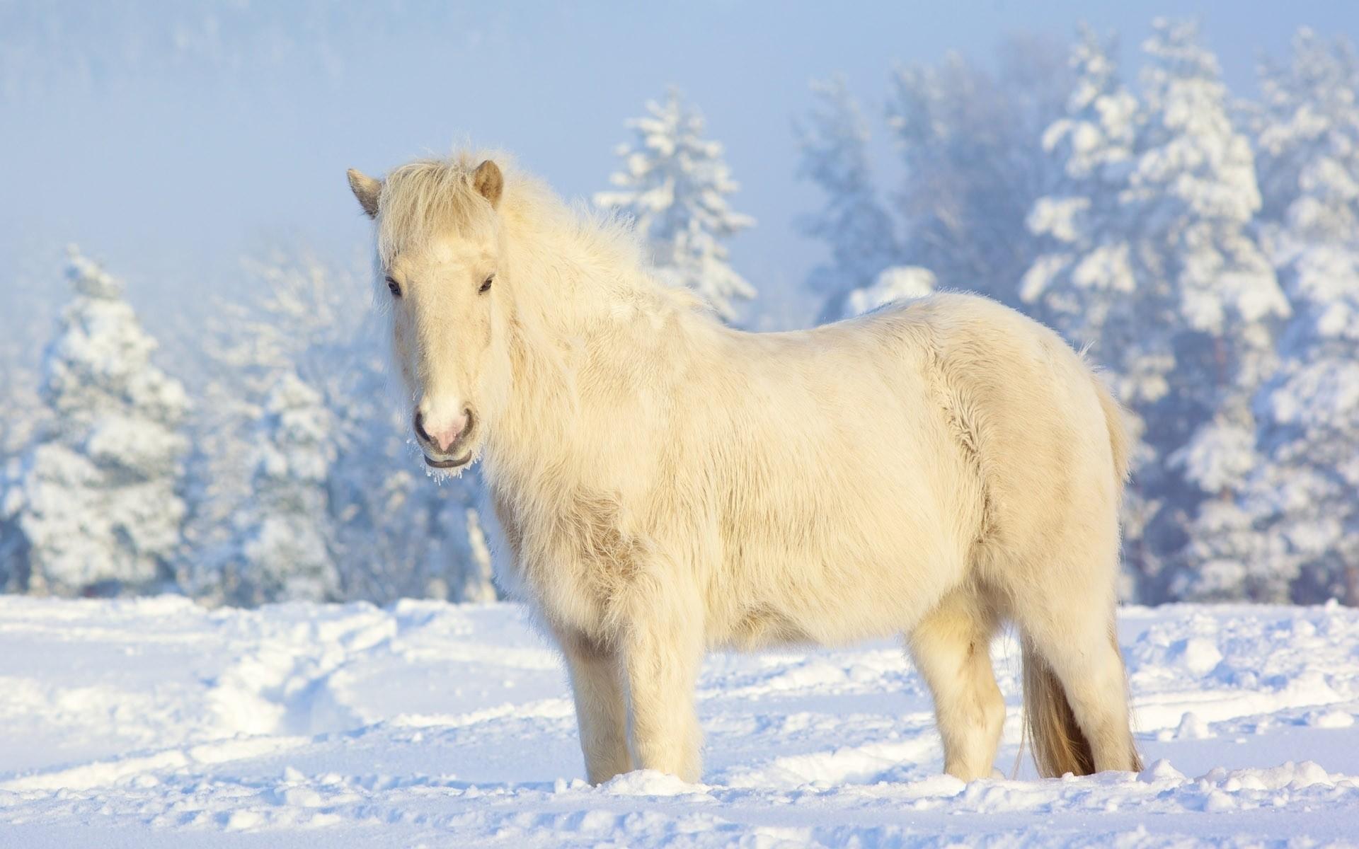 winter horse wallpaper (55+ images)
