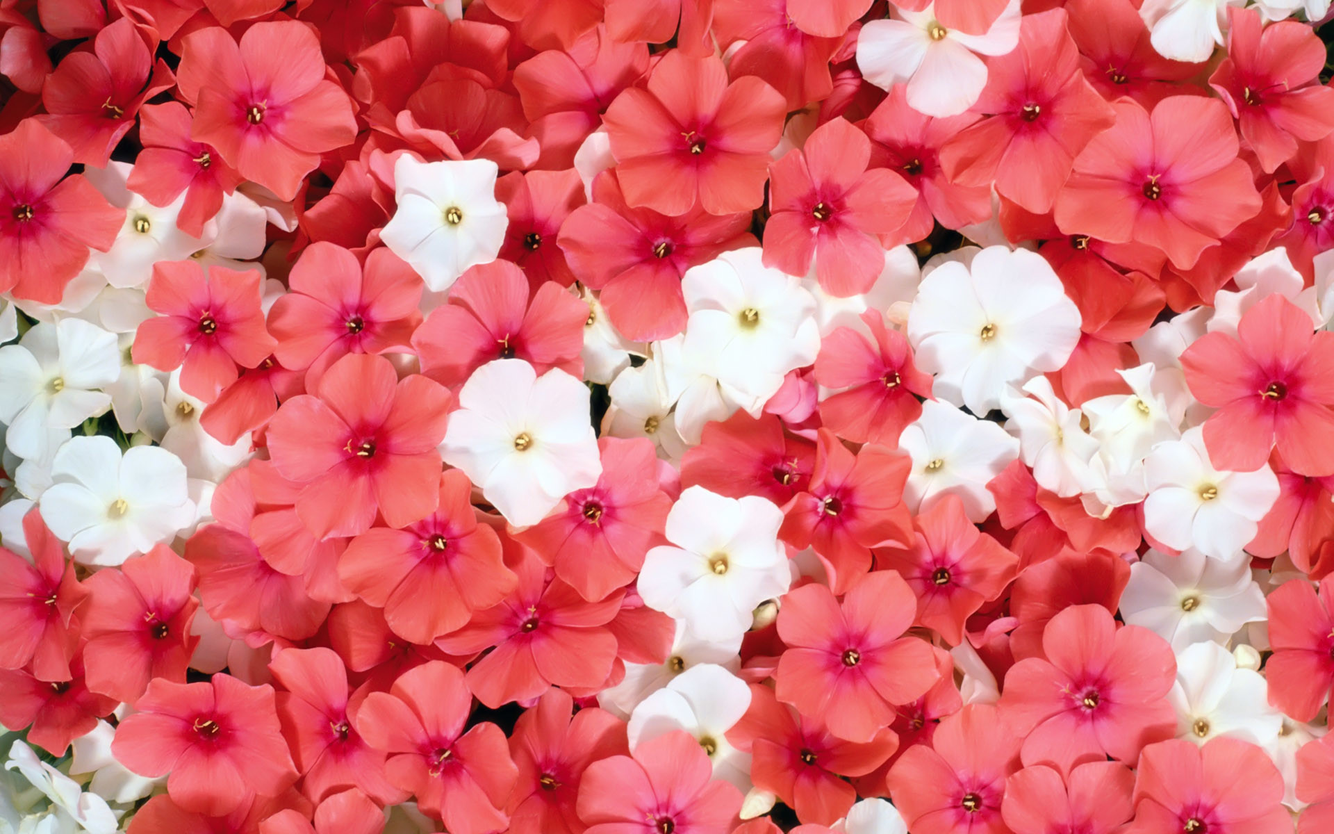 Pink Flower Wallpaper Background 55 Images