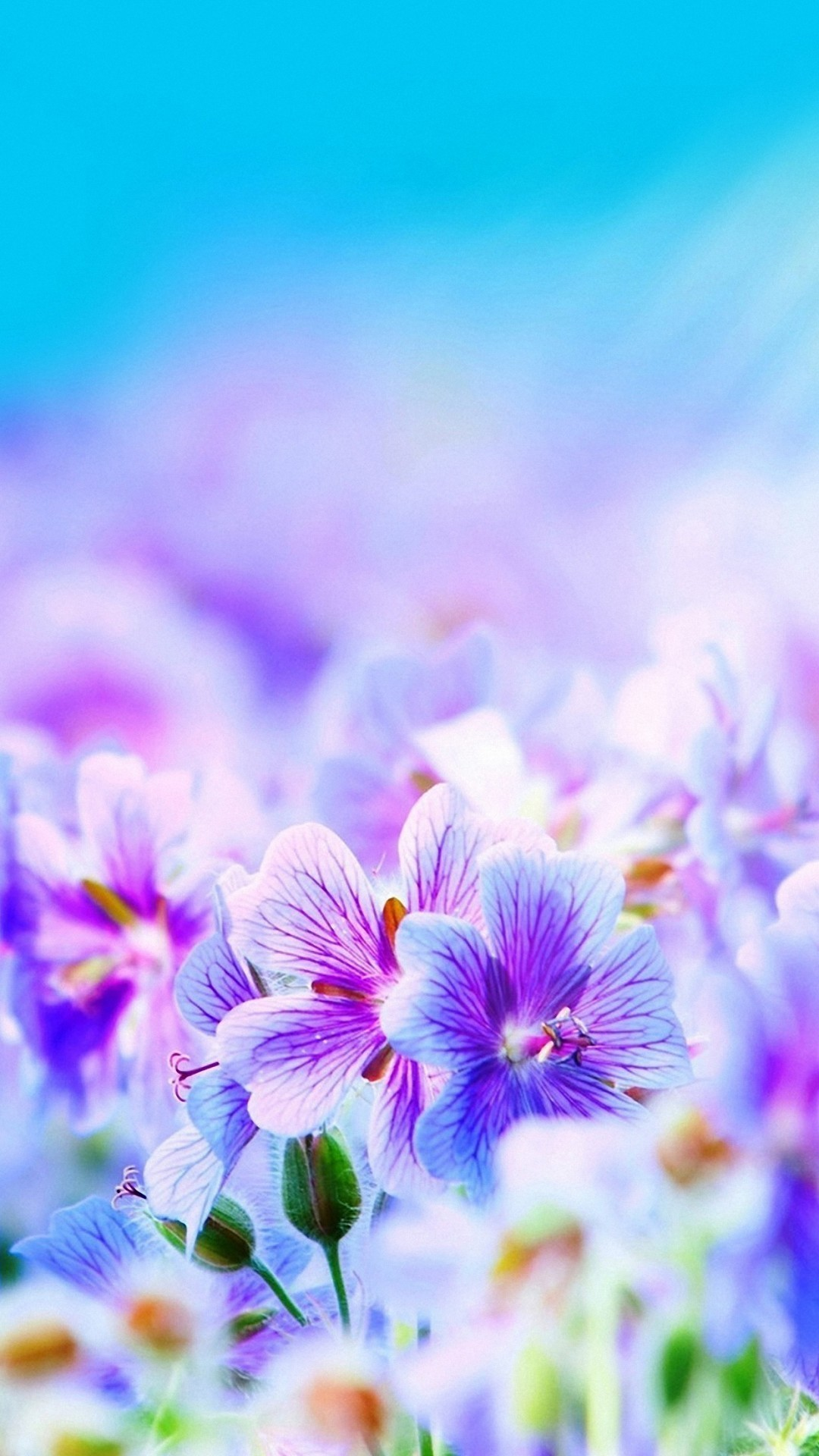 Really cute wallpapers 60 images 1080x1920 1080x1920 1080x1920 purple pretty flowers iphone 6s wallpapers hd mightylinksfo