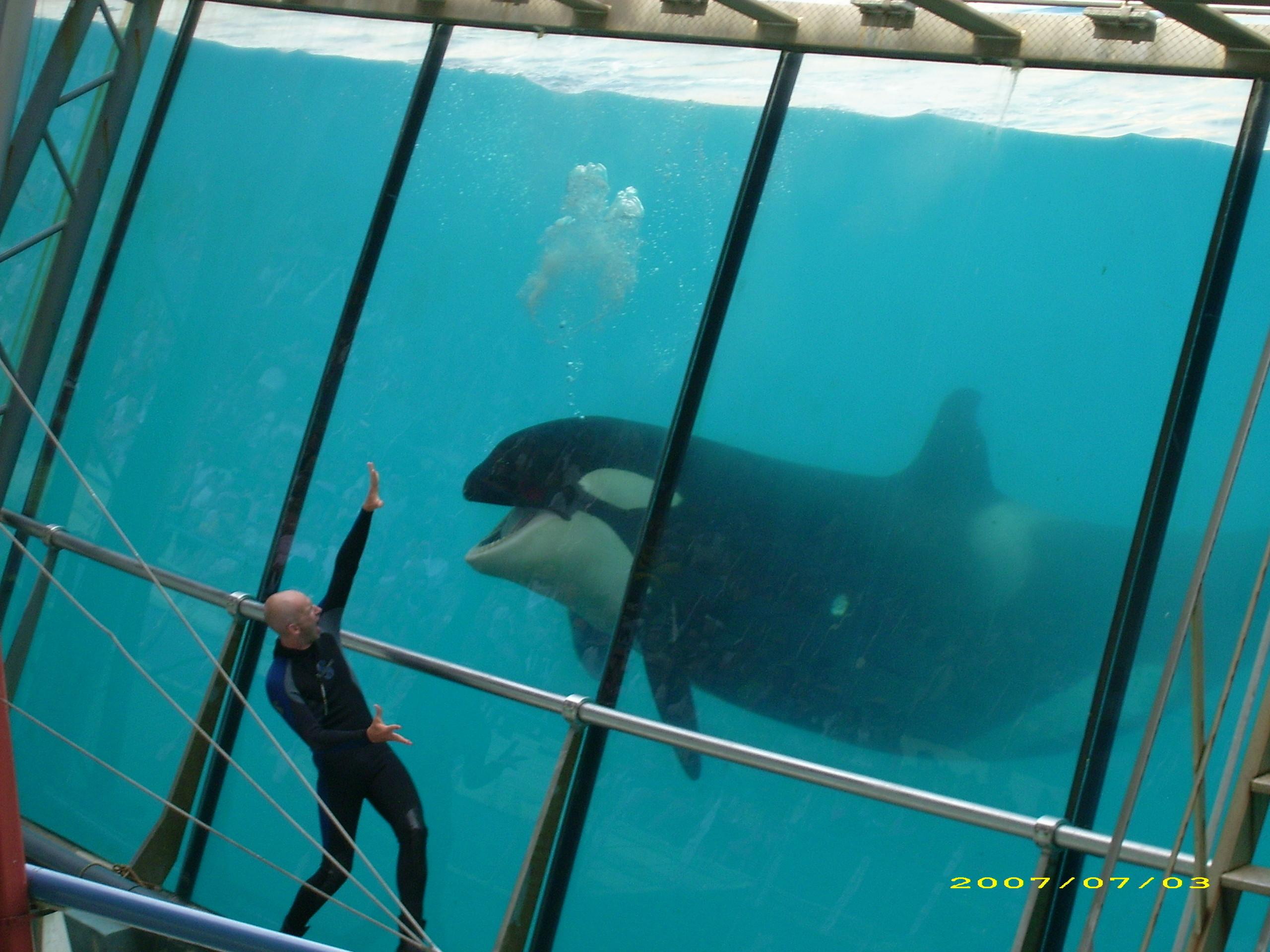 Orca whale wallpaper 56 images 1920x1080 orca wallpaper 9 altavistaventures Image collections
