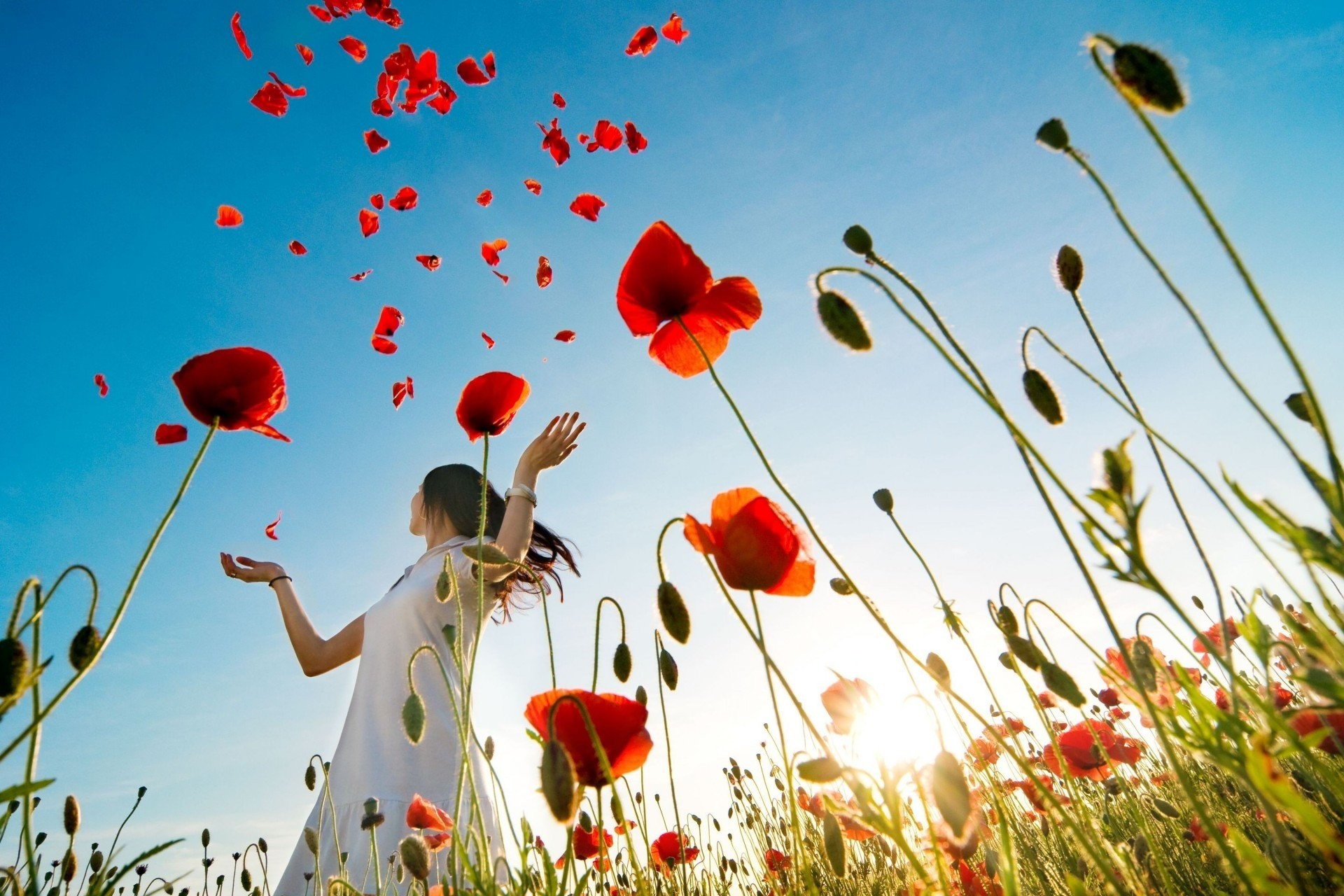 1920x1280 flower full screen widescreen girl mood poppy background wallpaper brunette  poppies plants close up the field