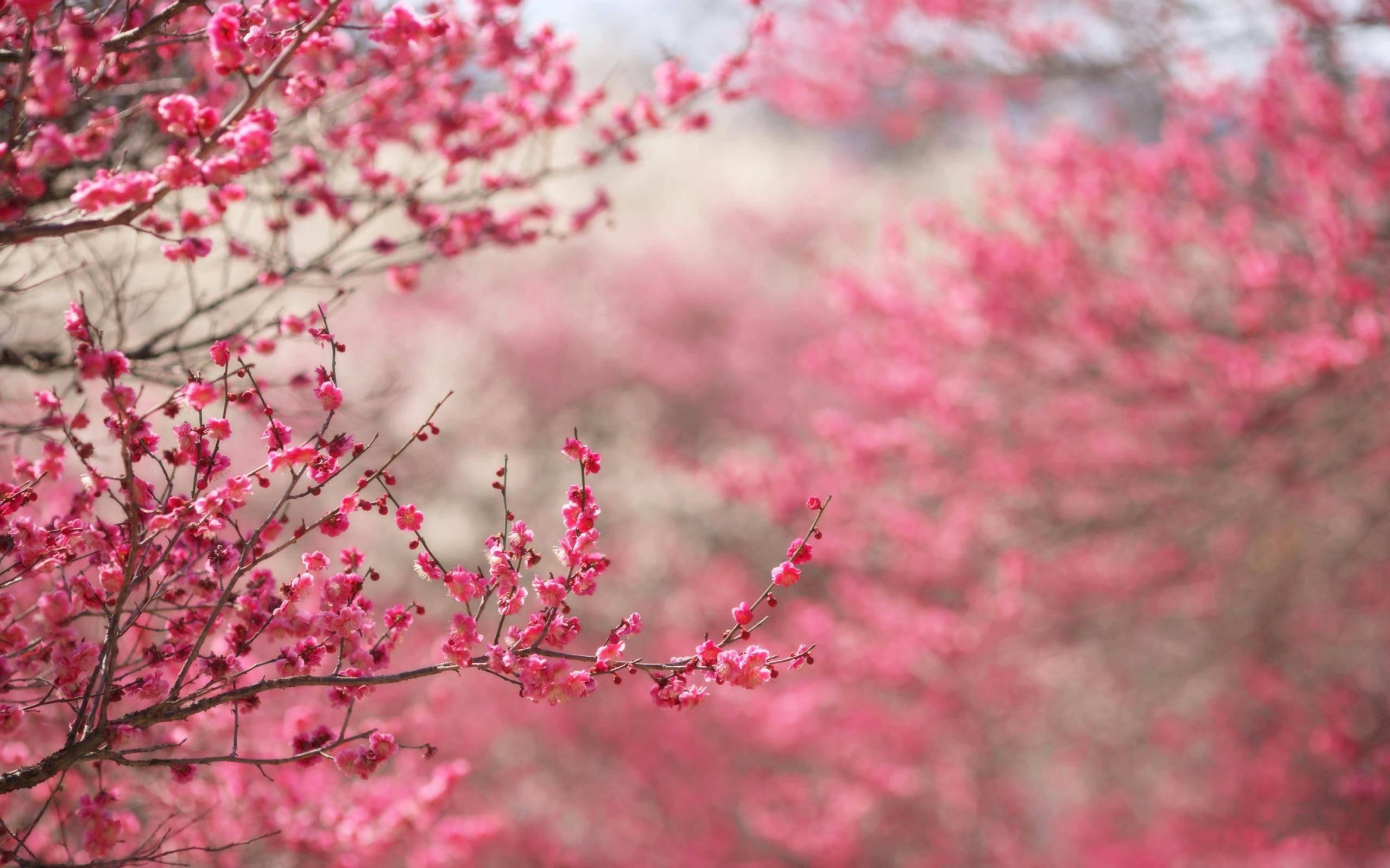 Spring desktop wallpapers backgrounds 65 images - Backgrounds springtime ...