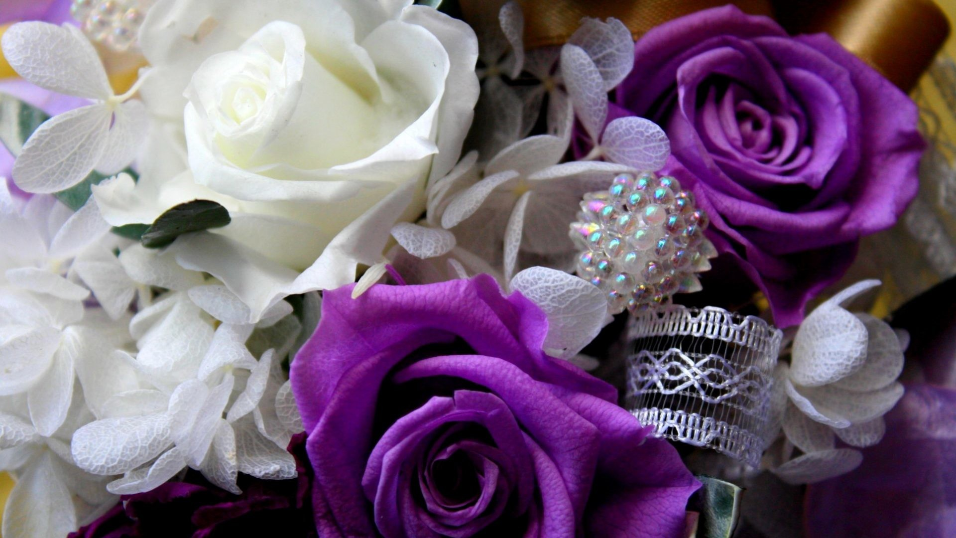 Purple Roses Background 45 Images