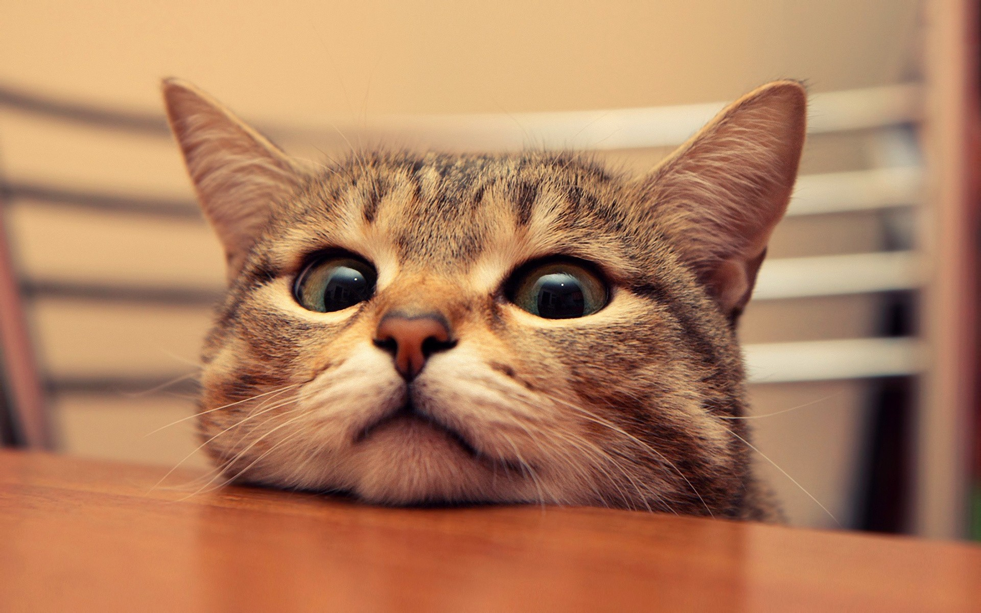 Funny Cats Wallpapers (57+ images)