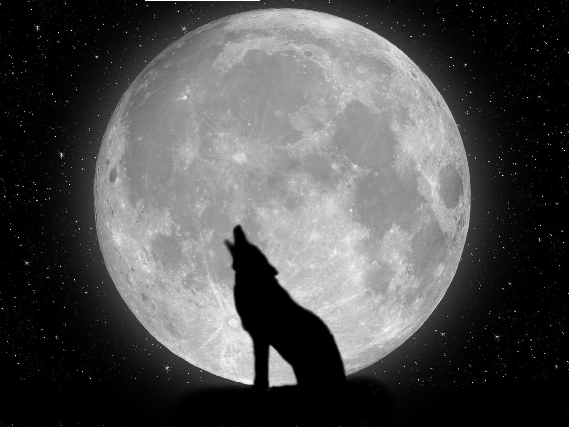 1920x1440  Lone Wolf Wallpaper 1280×1024 Lone Wolf Wallpapers (38 Wallpapers)  | Adorable Wallpapers | Desktop | Pinterest | Wolf wallpaper, Wallpaper and  ...