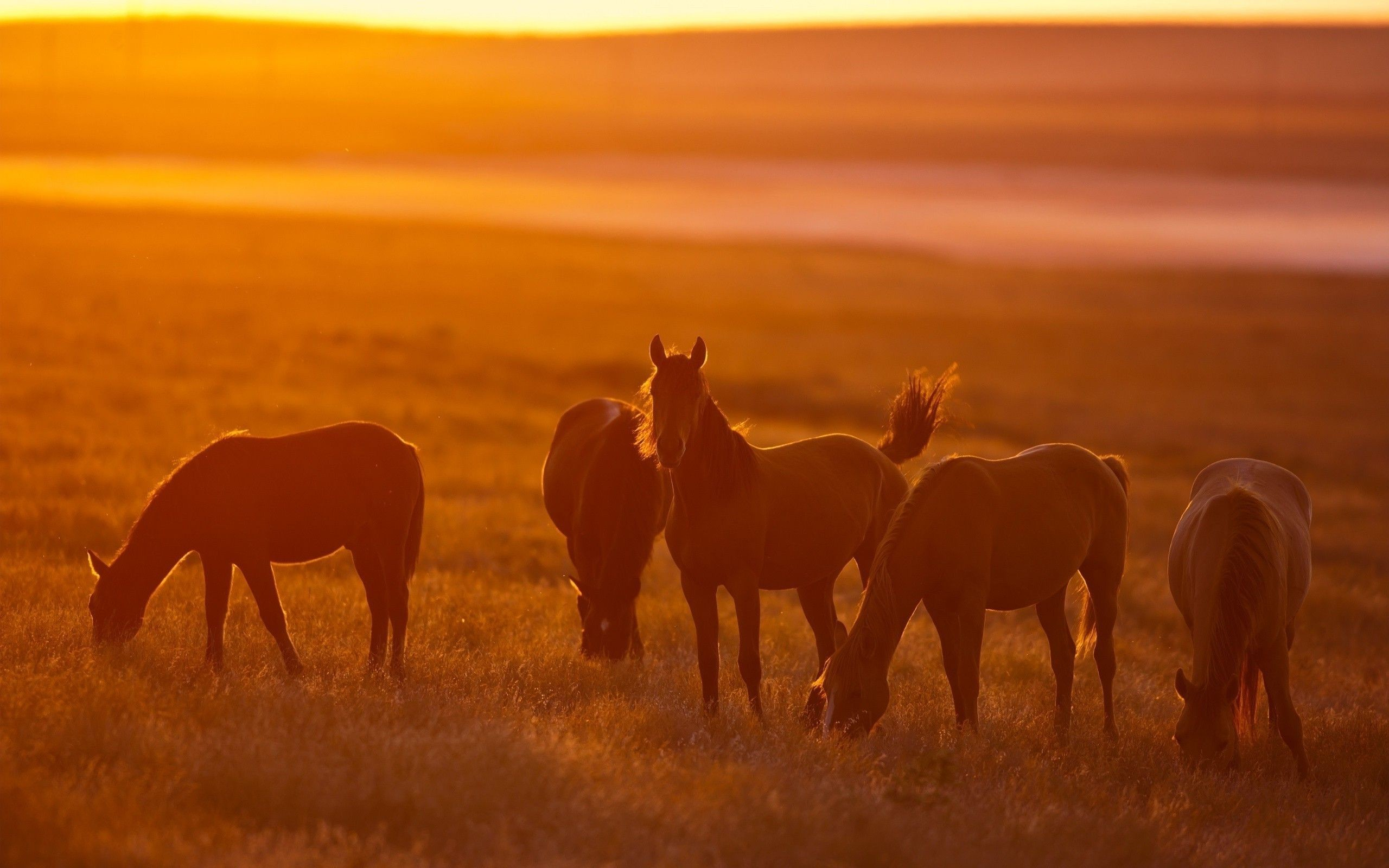 2560x1600 Wild Horses Wallpapers - Full HD wallpaper search