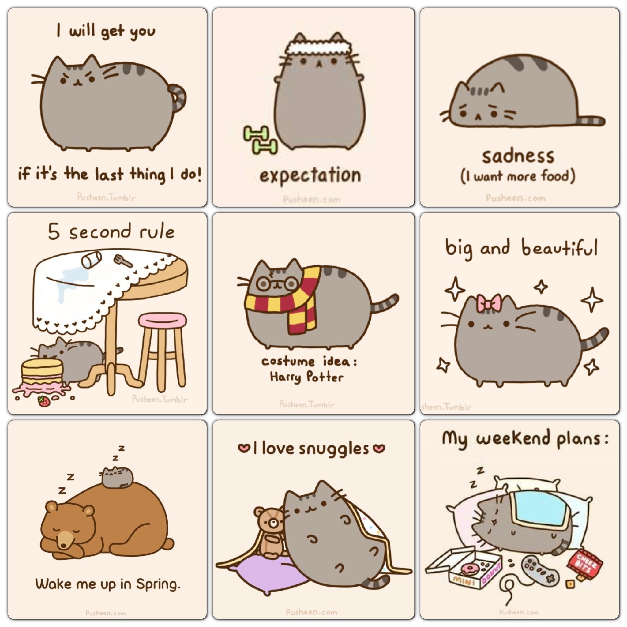 Pusheen Cat Desktop Wallpaper (59+ Images