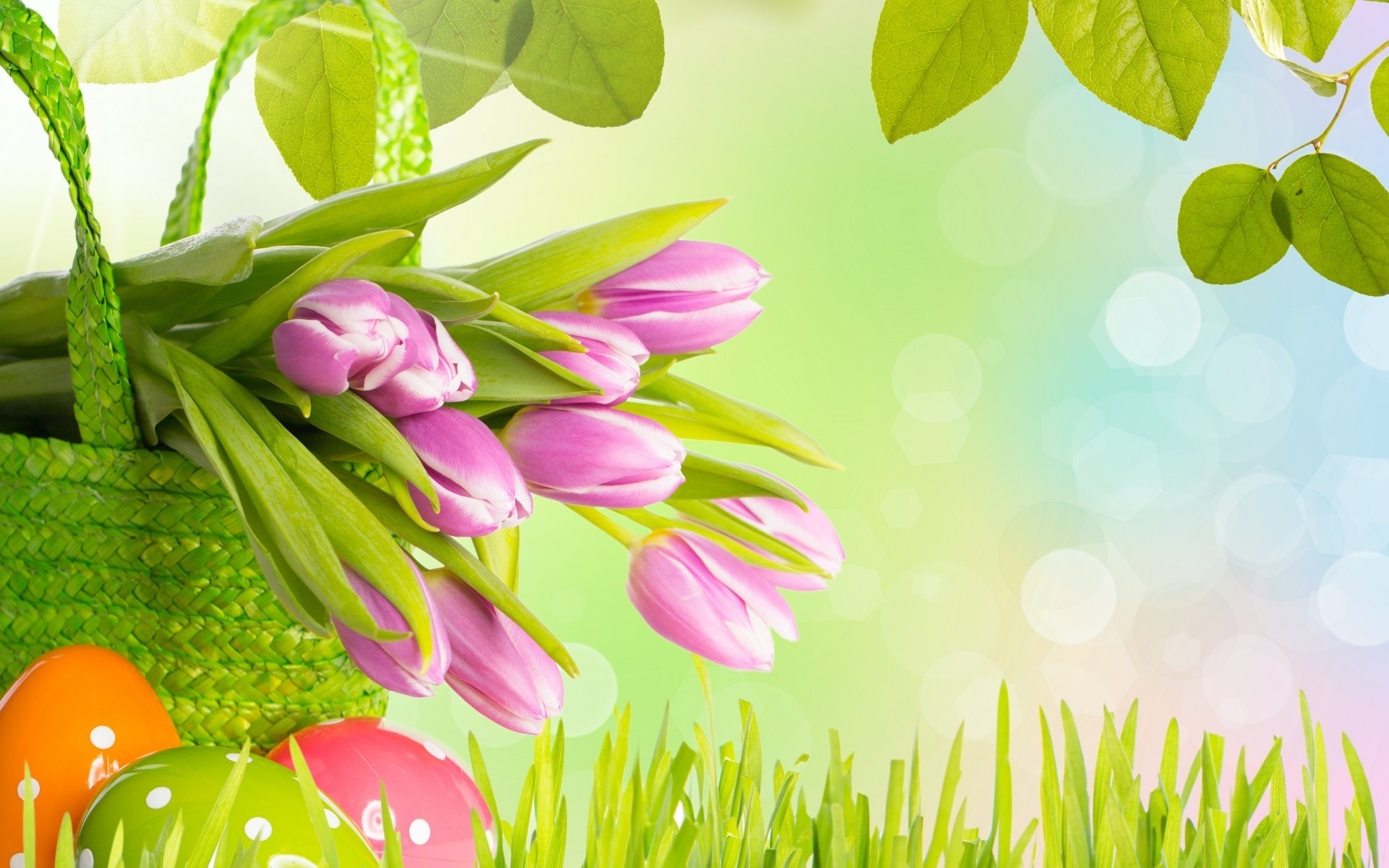 1920x1200 Easter Tulips Wide Desktop Background wallpaper free