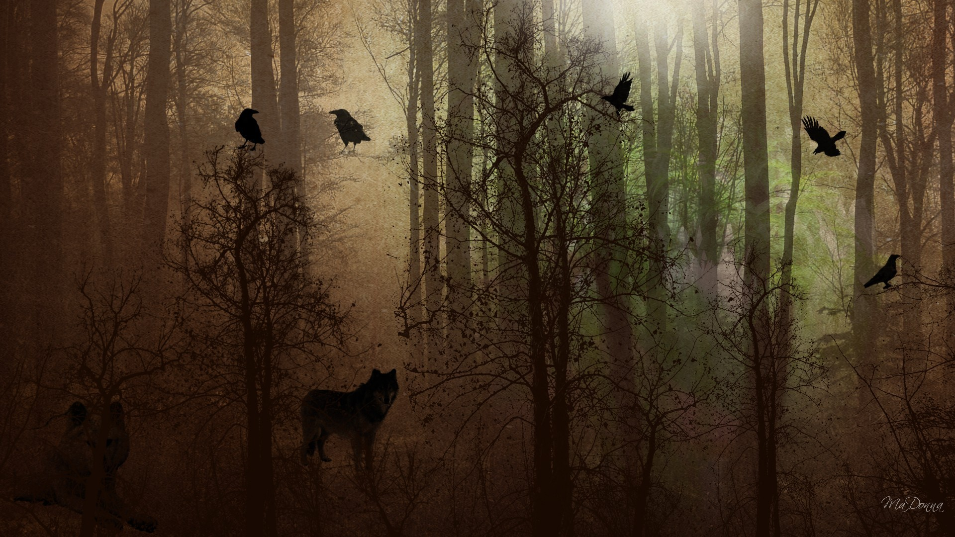 Crow Desktop Wallpaper 67 Images