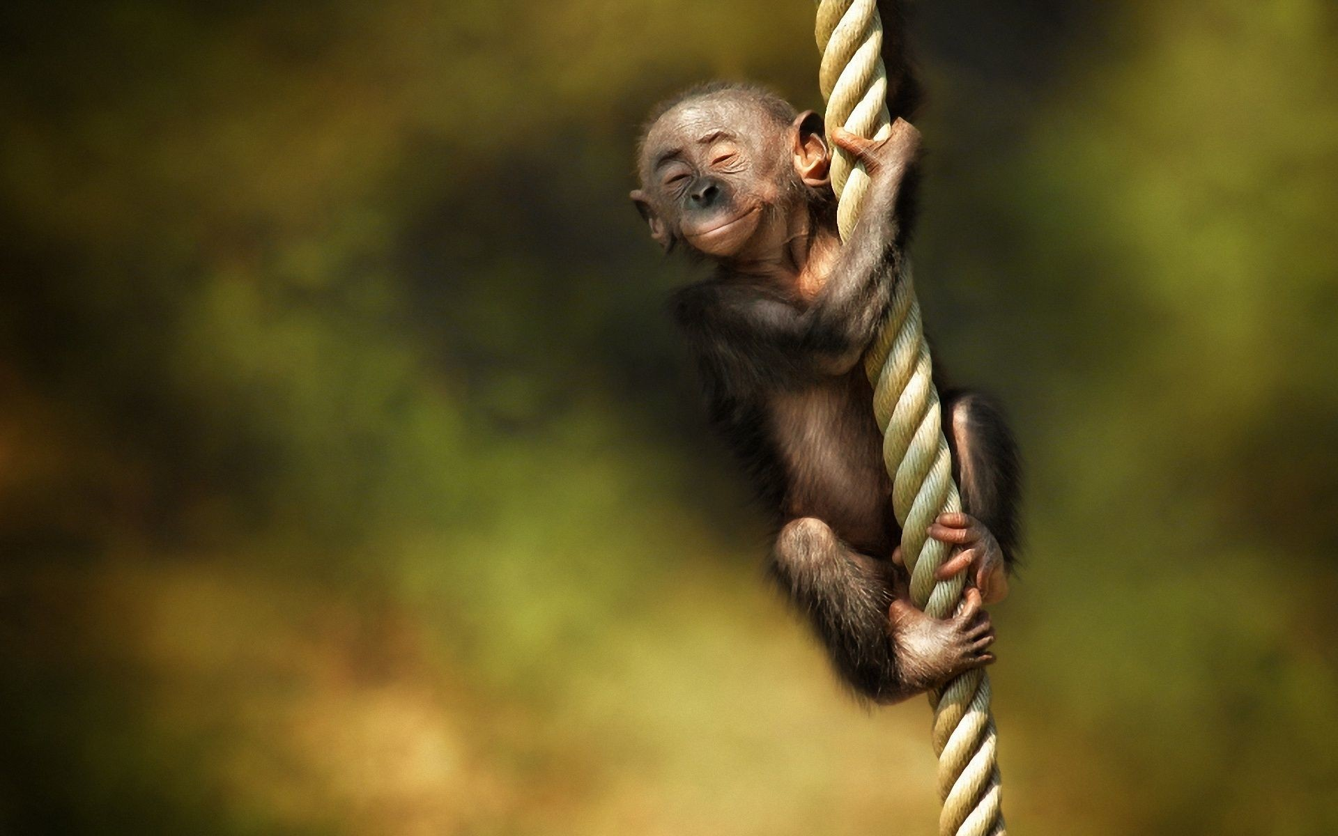 1920x1200 Monkey Wallpapers HD Pictures