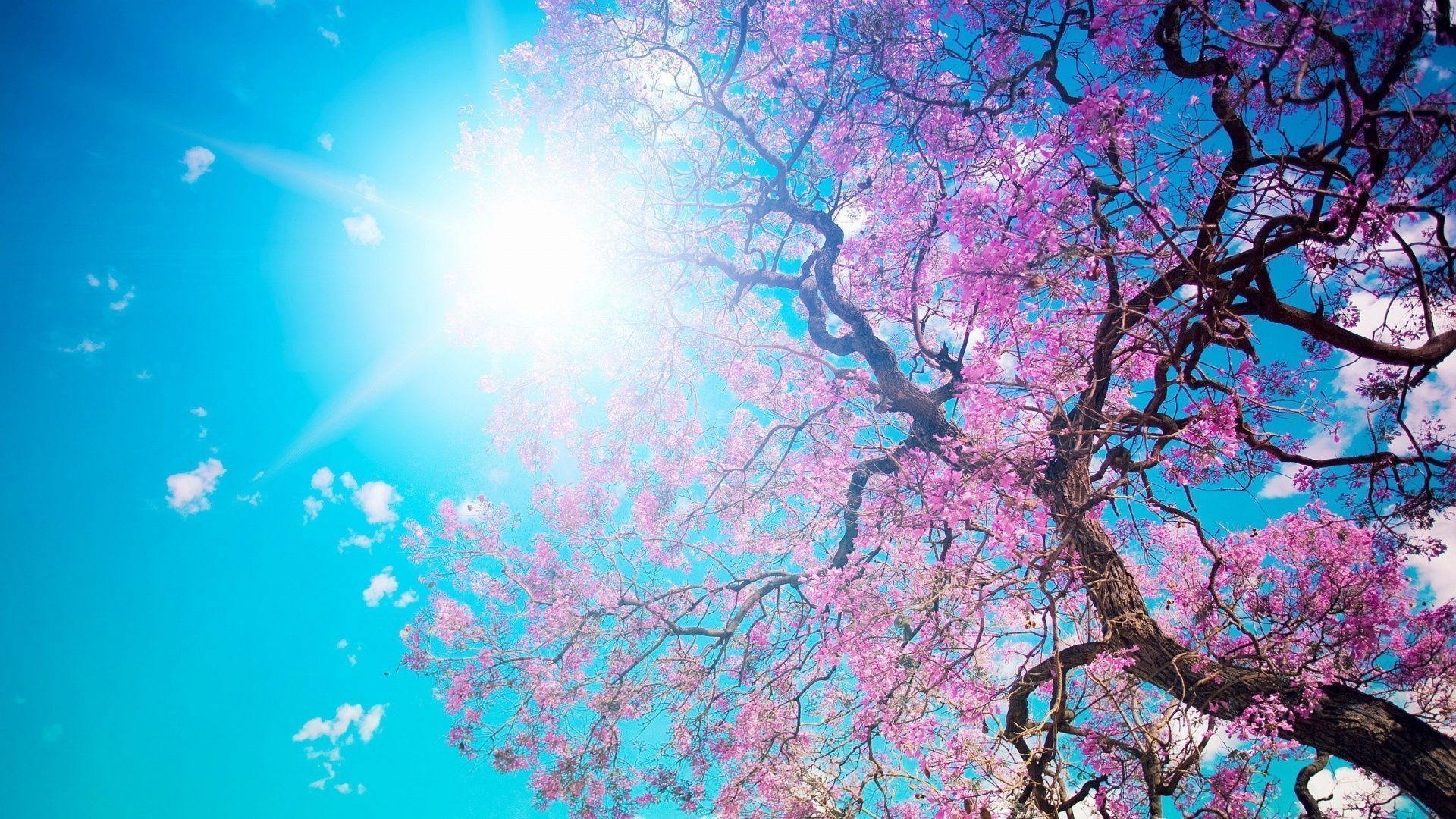 1920x1080 Spring Wallpaper Flowers G7M - Pretty Wallpapers HD