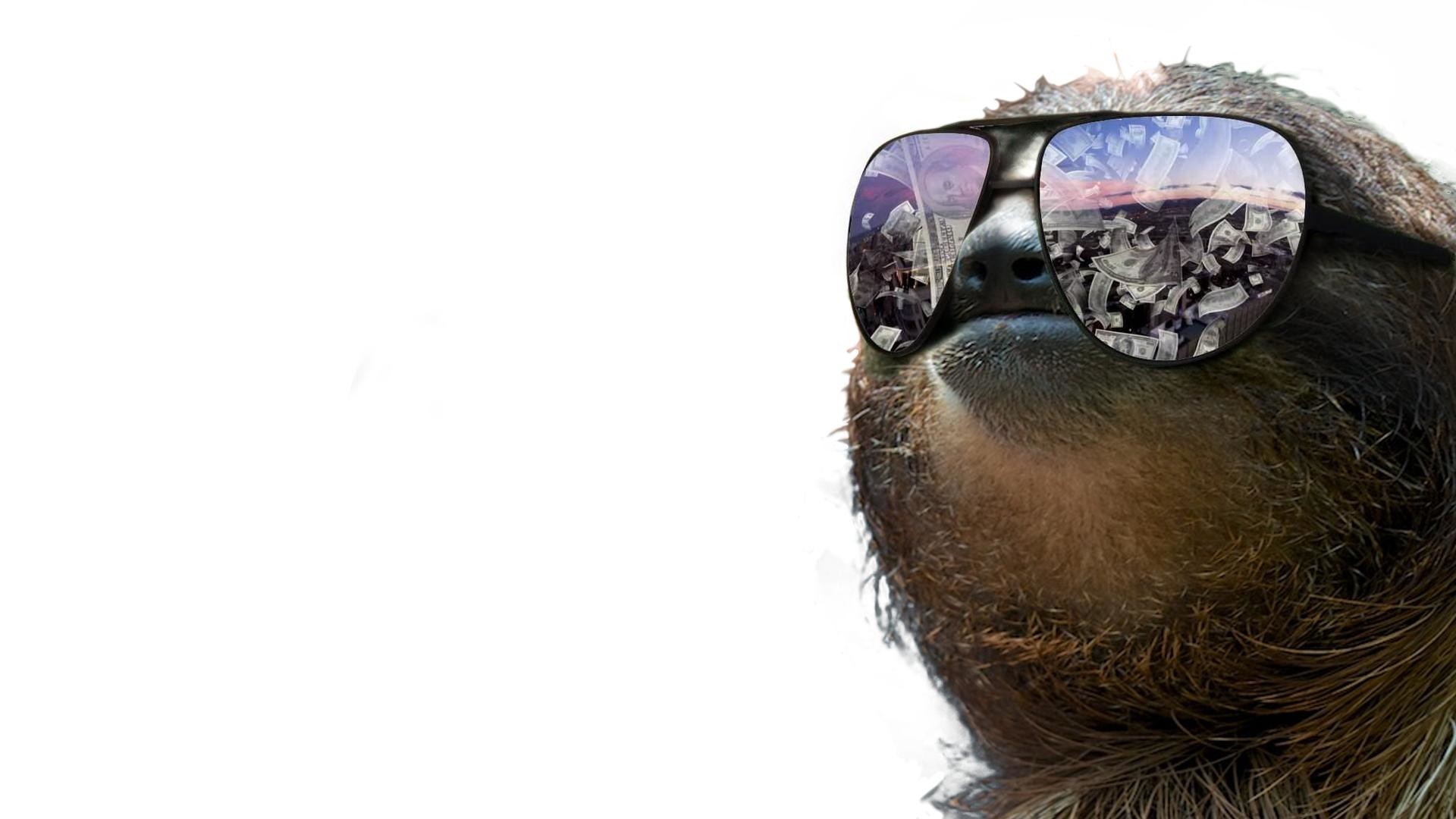 1920x1080 Sloth Wallpaper Design Ideas A Very Slothy Xpost From