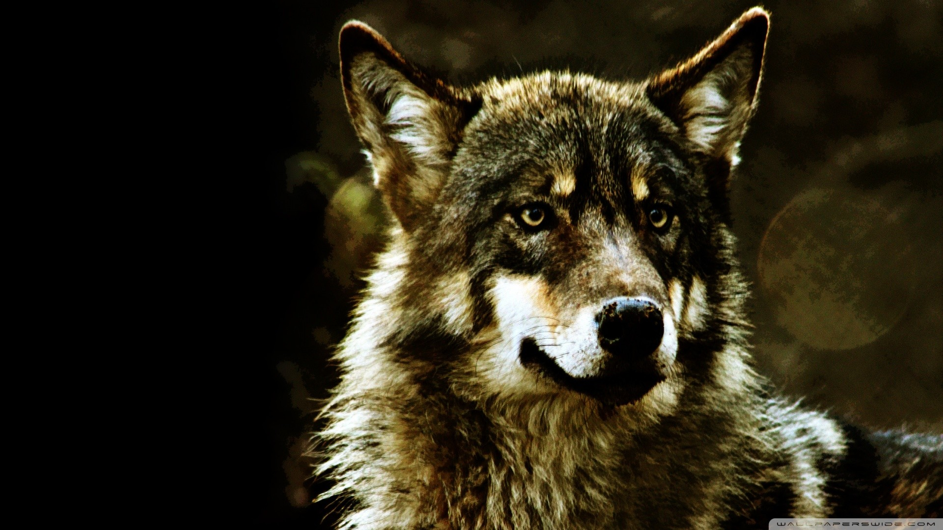 1920x1080 839 Wolf HD Wallpapers Backgrounds Wallpaper Abyss - HD Wallpapers