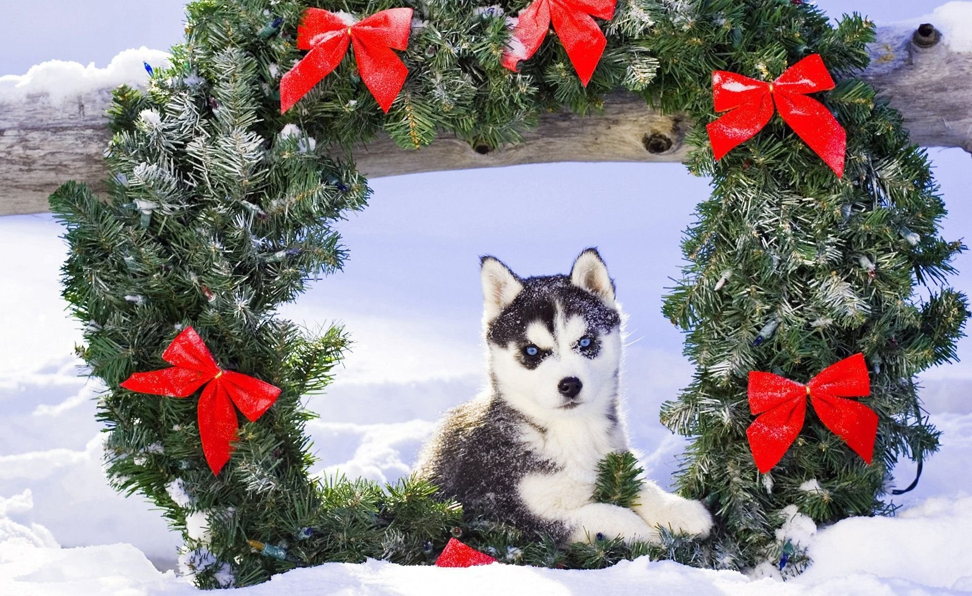 1920x1179 puppy husk snow christmas
