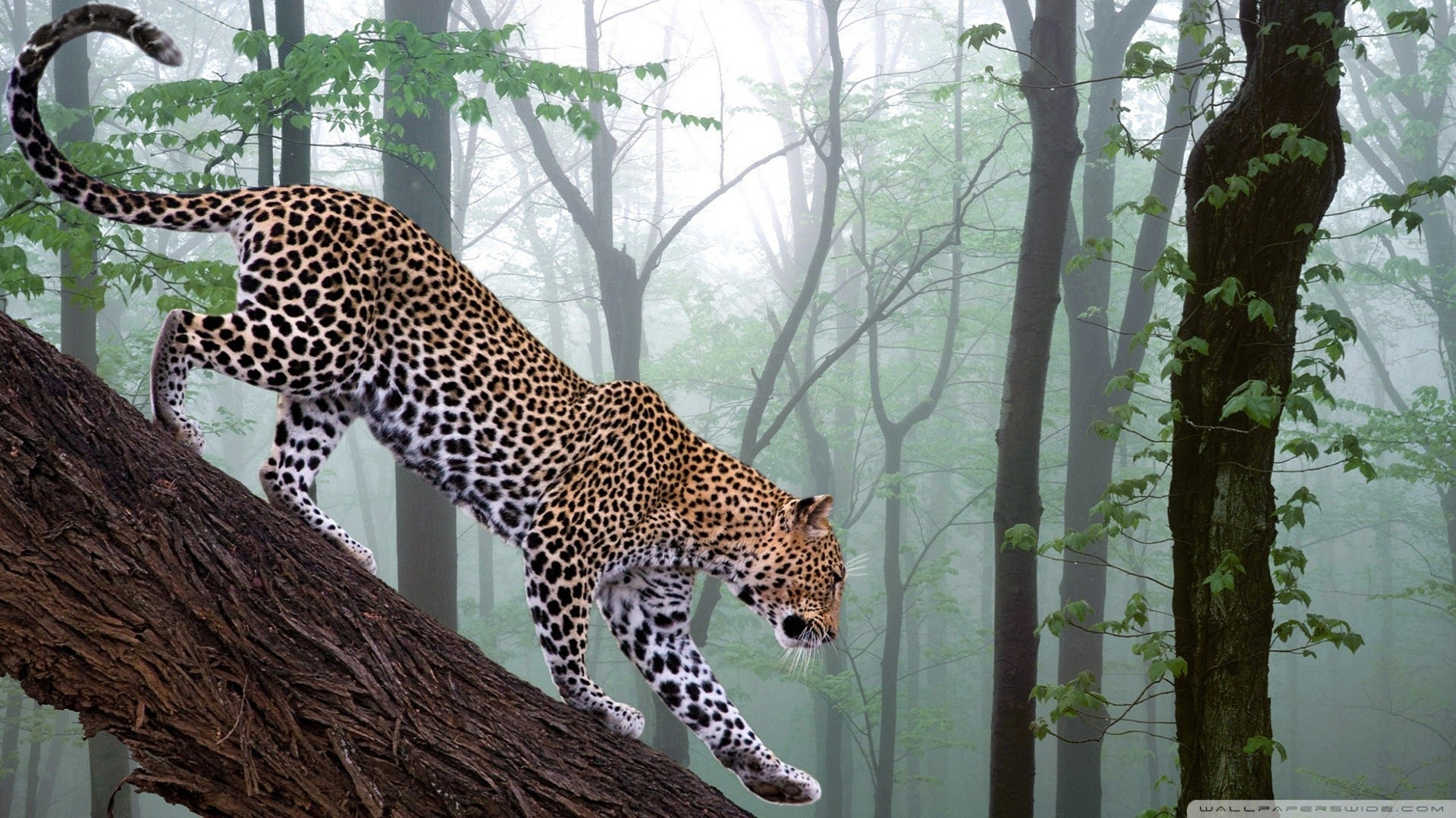 1920x1080 Jungle Animals Real Life Cool Wallpapers