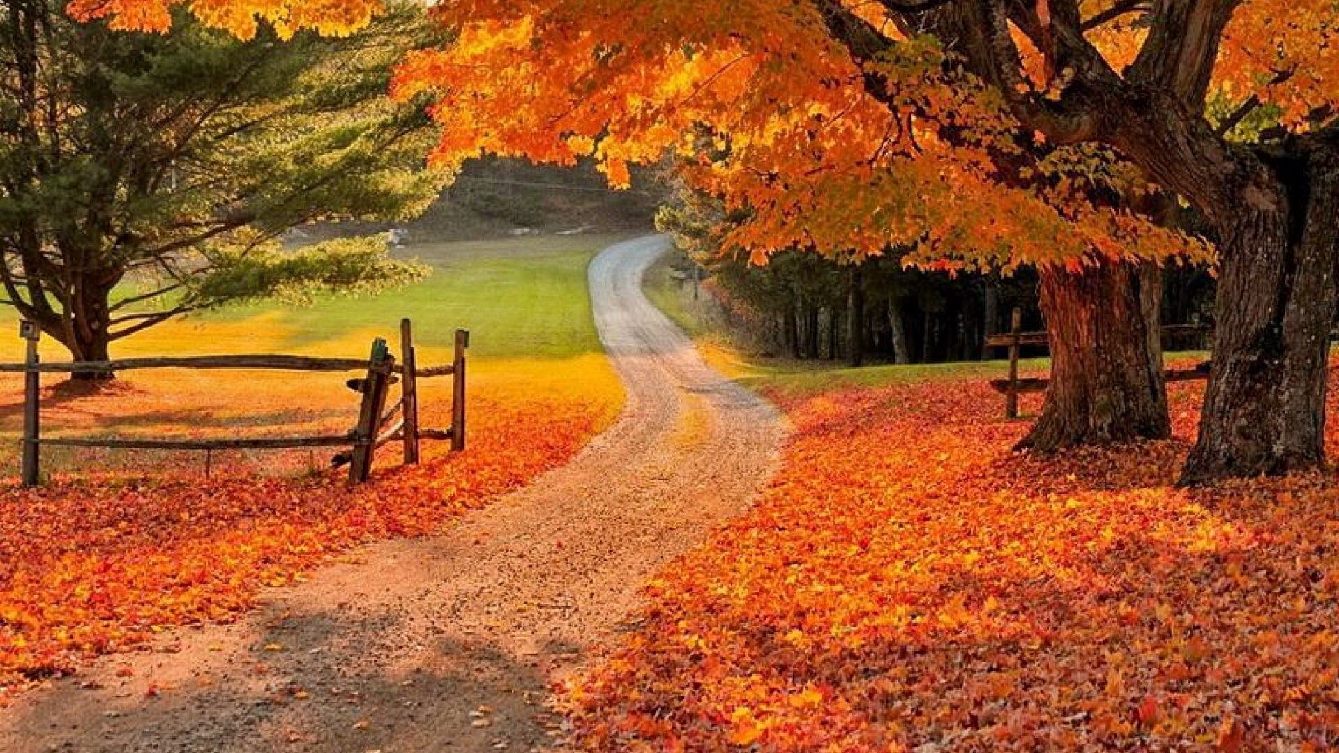 Beautiful Fall Backgrounds (50+ images)
